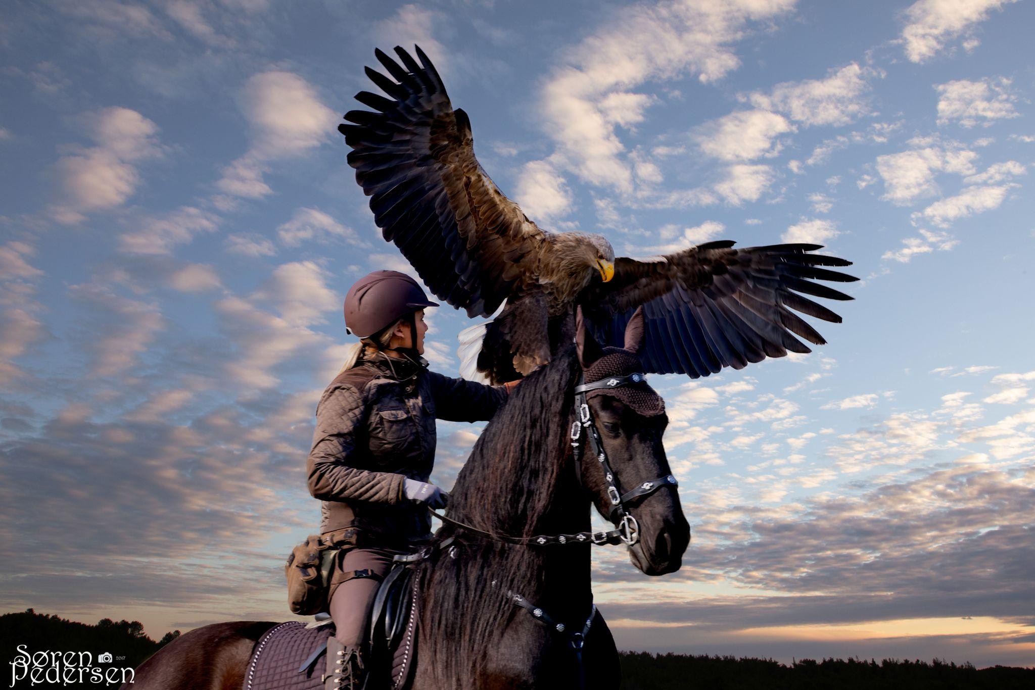 Eagleworld, Denmark