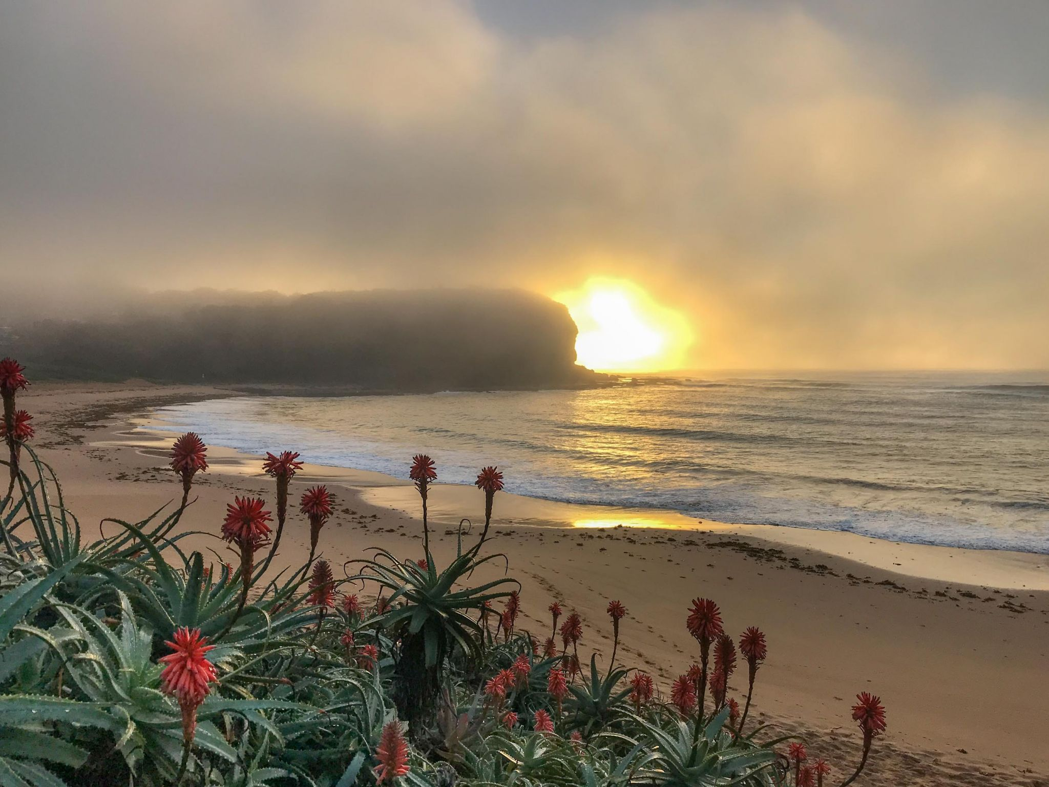 Fog Rise sunrise Mona Vale Head land Sydney, Australia