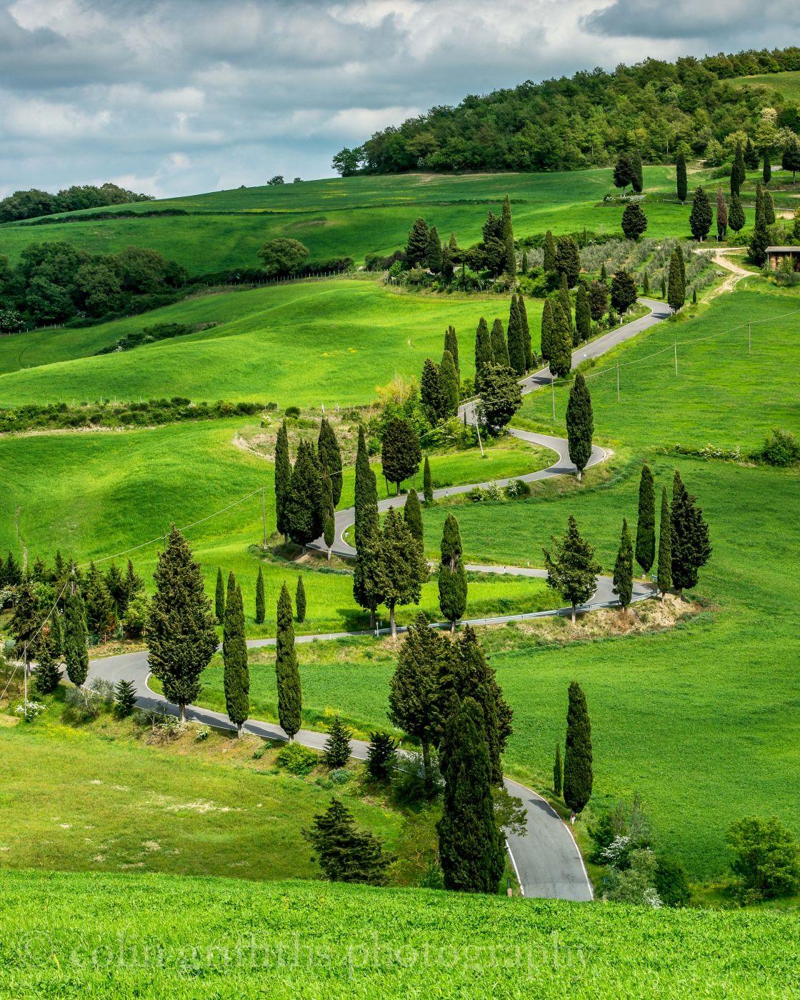 Monteicchiello Cypress trees, Italy