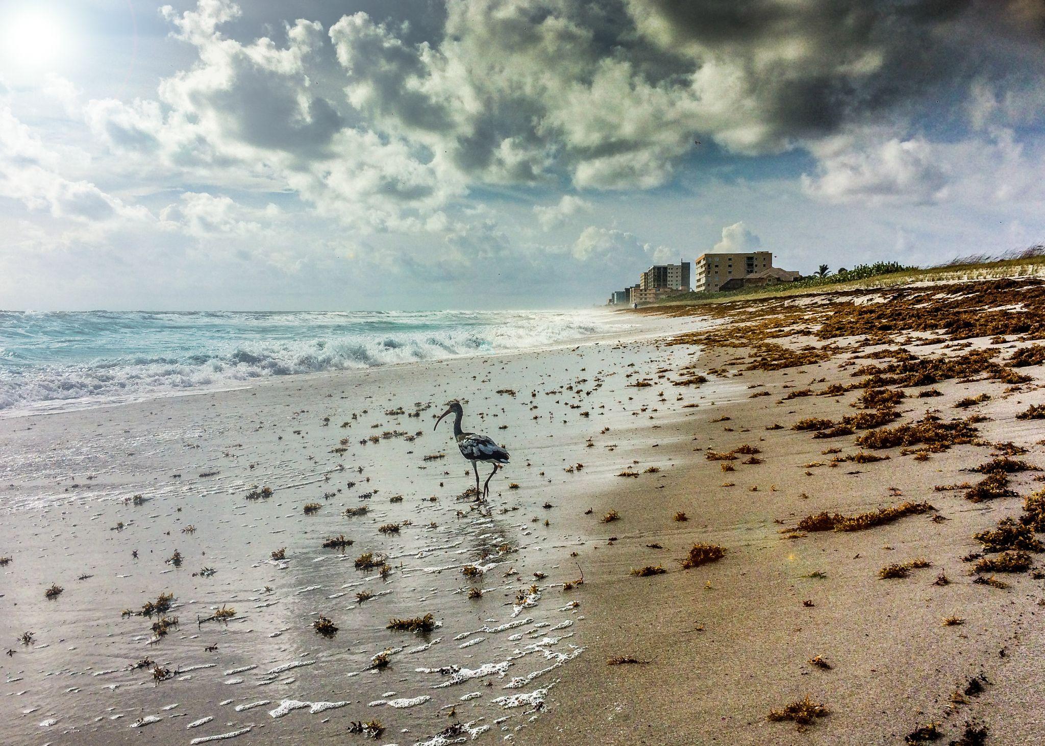 satellite Beach, USA