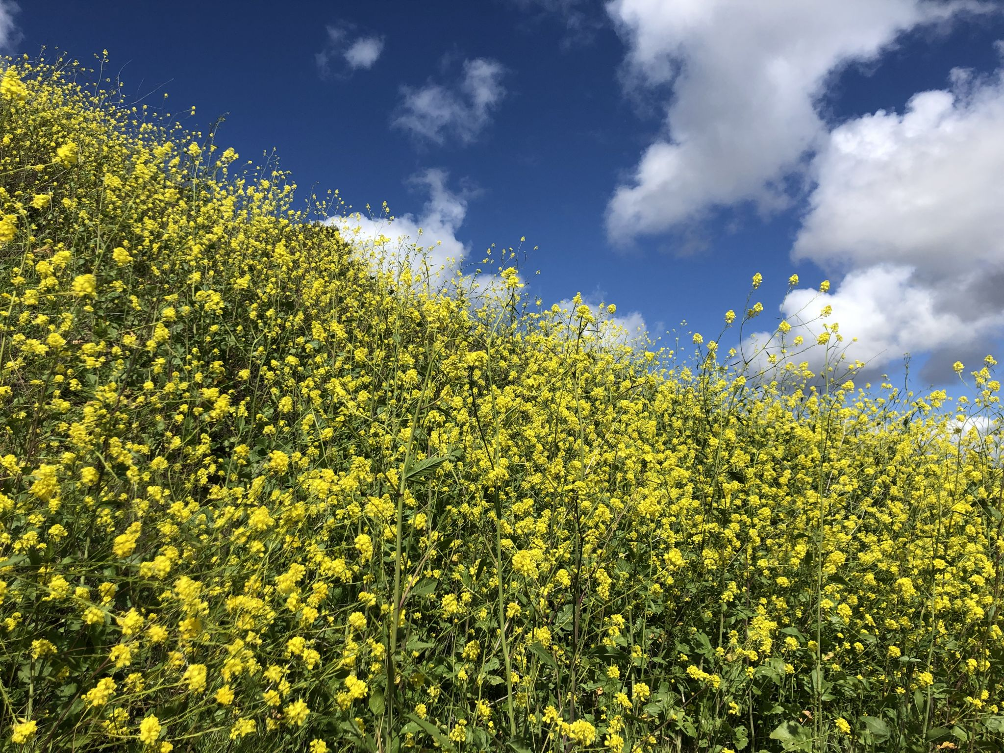 Spring flowers, USA