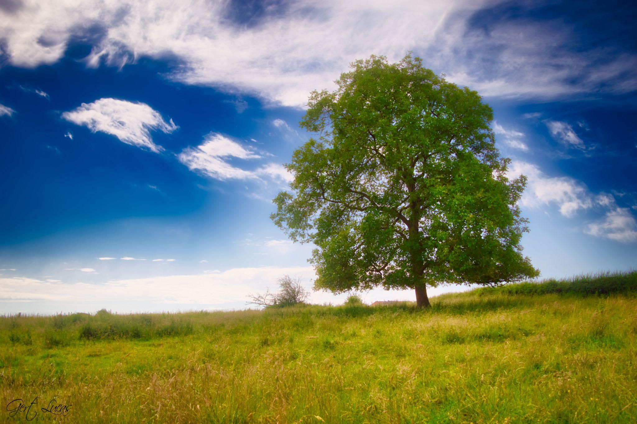 Alsput - The Lone Tree, Belgium