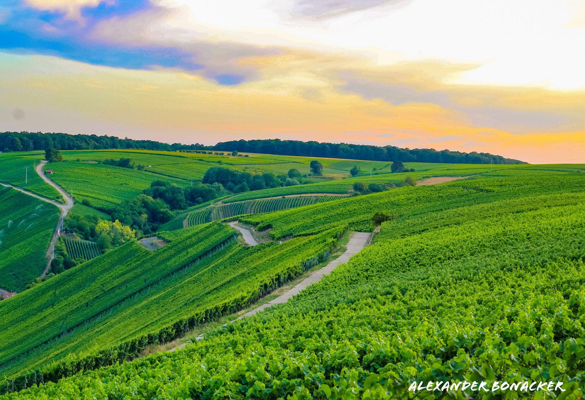 Blick über die Weinberge von der Vogelsburg aus, Germany