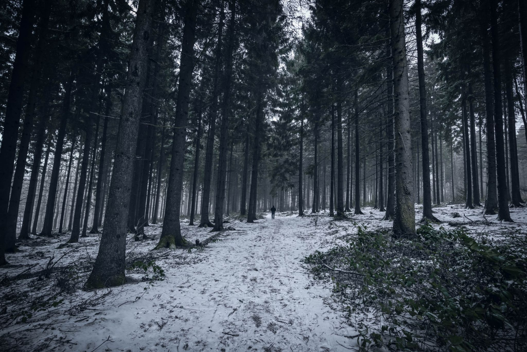 Cronenberg Forest, Germany