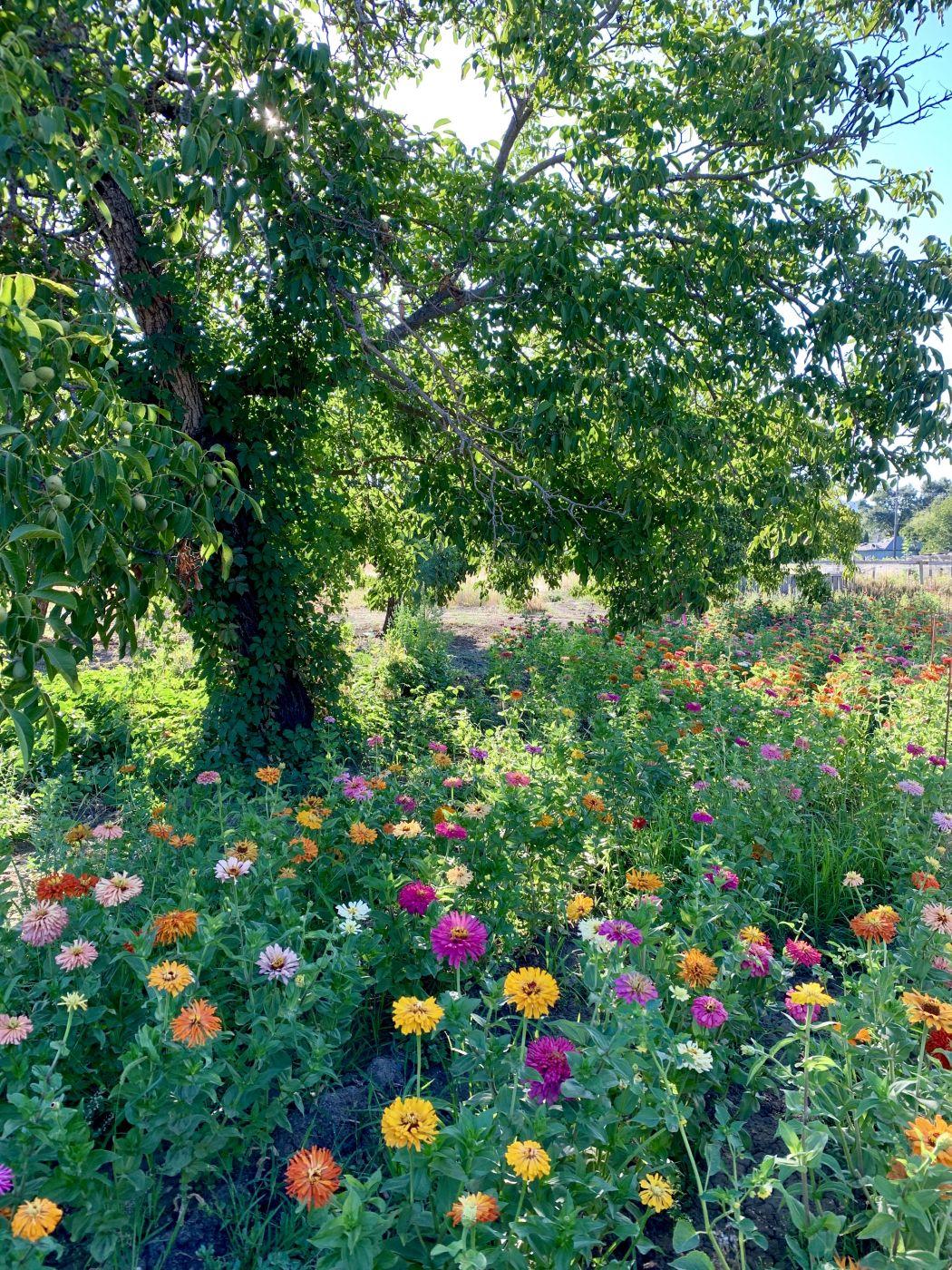 Flowers on the farm, USA
