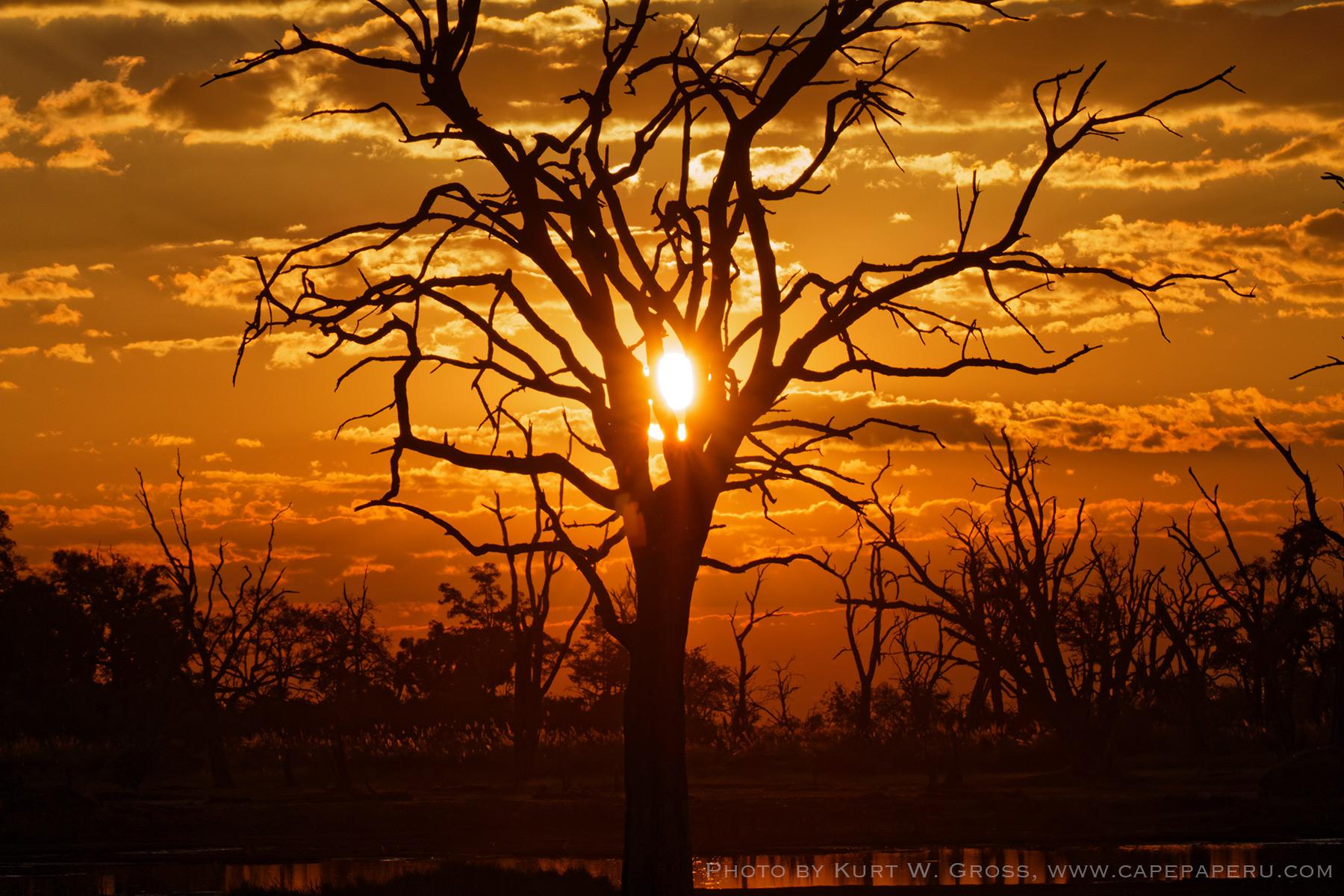 Gamedrive Xakanaxa camp, Botswana