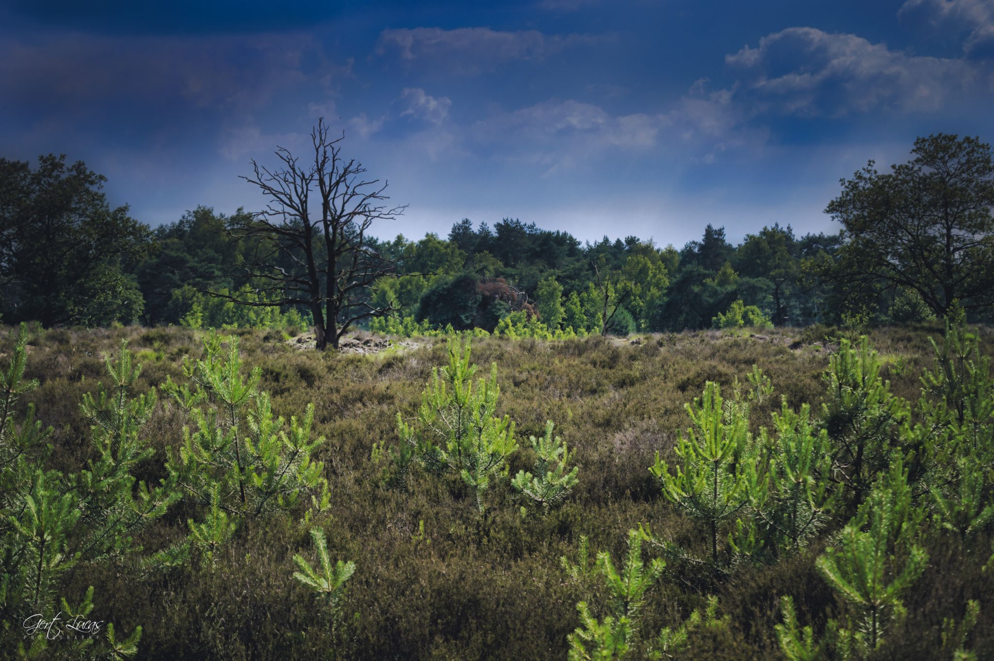 Kalmthoutse Heide, Belgium