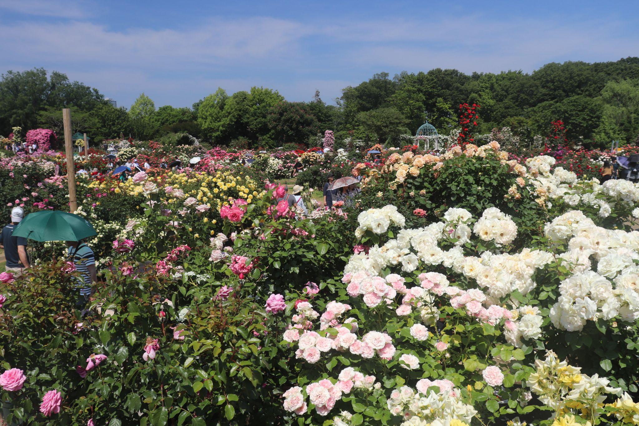 Keisei Rose Garden, Japan