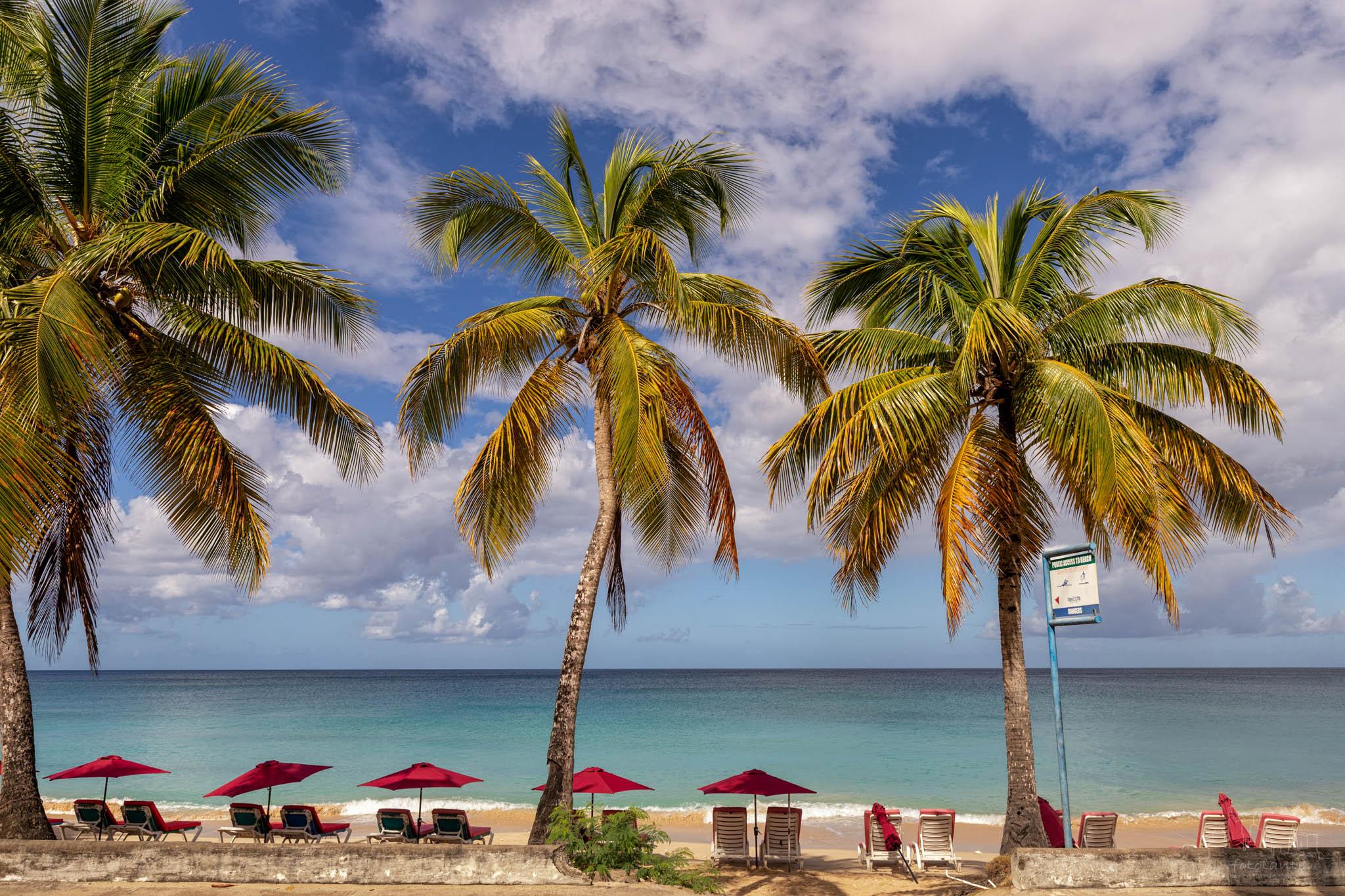 Mullins beach palm trees, Barbados