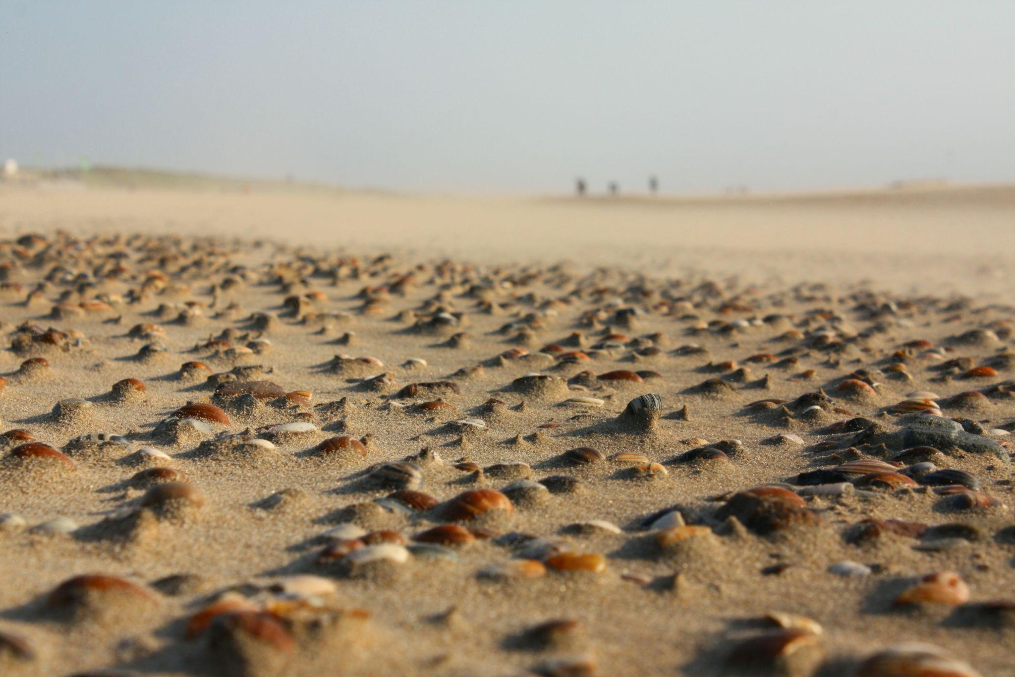 Muscheln am Strand von Egmond aan Zee, Netherlands
