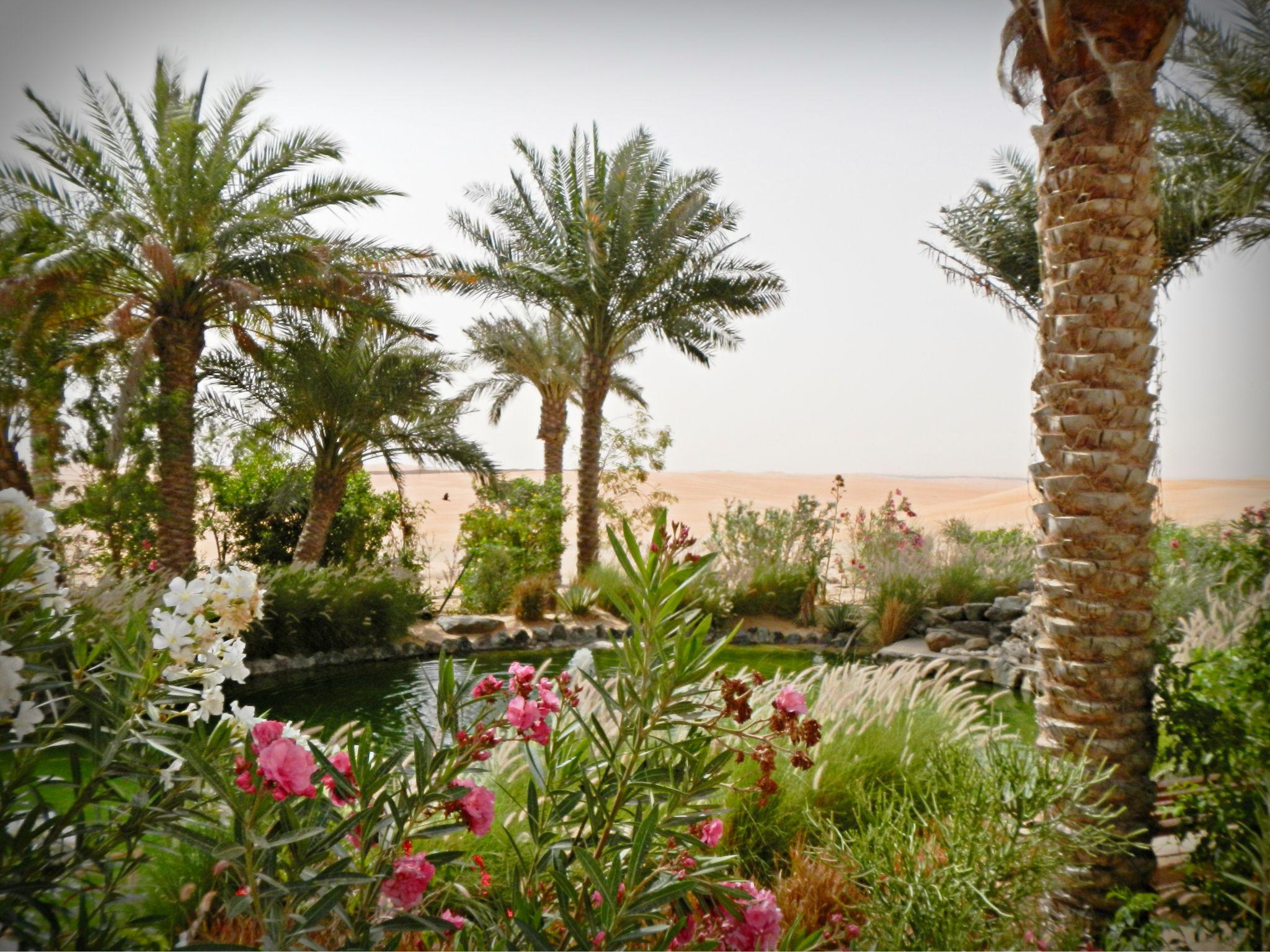Oasis in the desert, United Arab Emirates