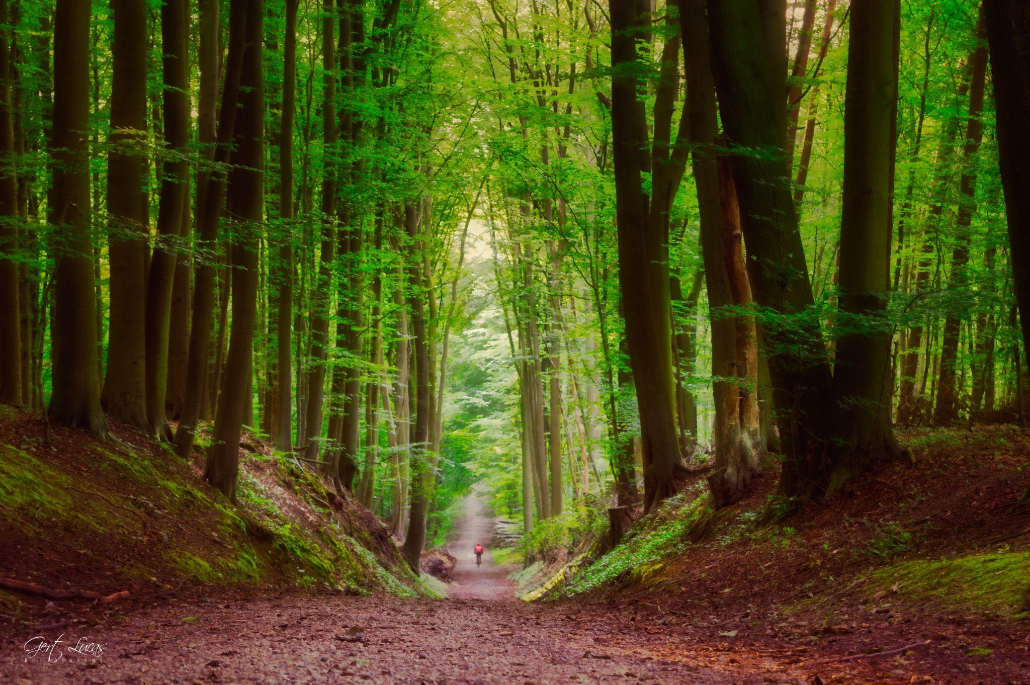 The hollow road, Belgium