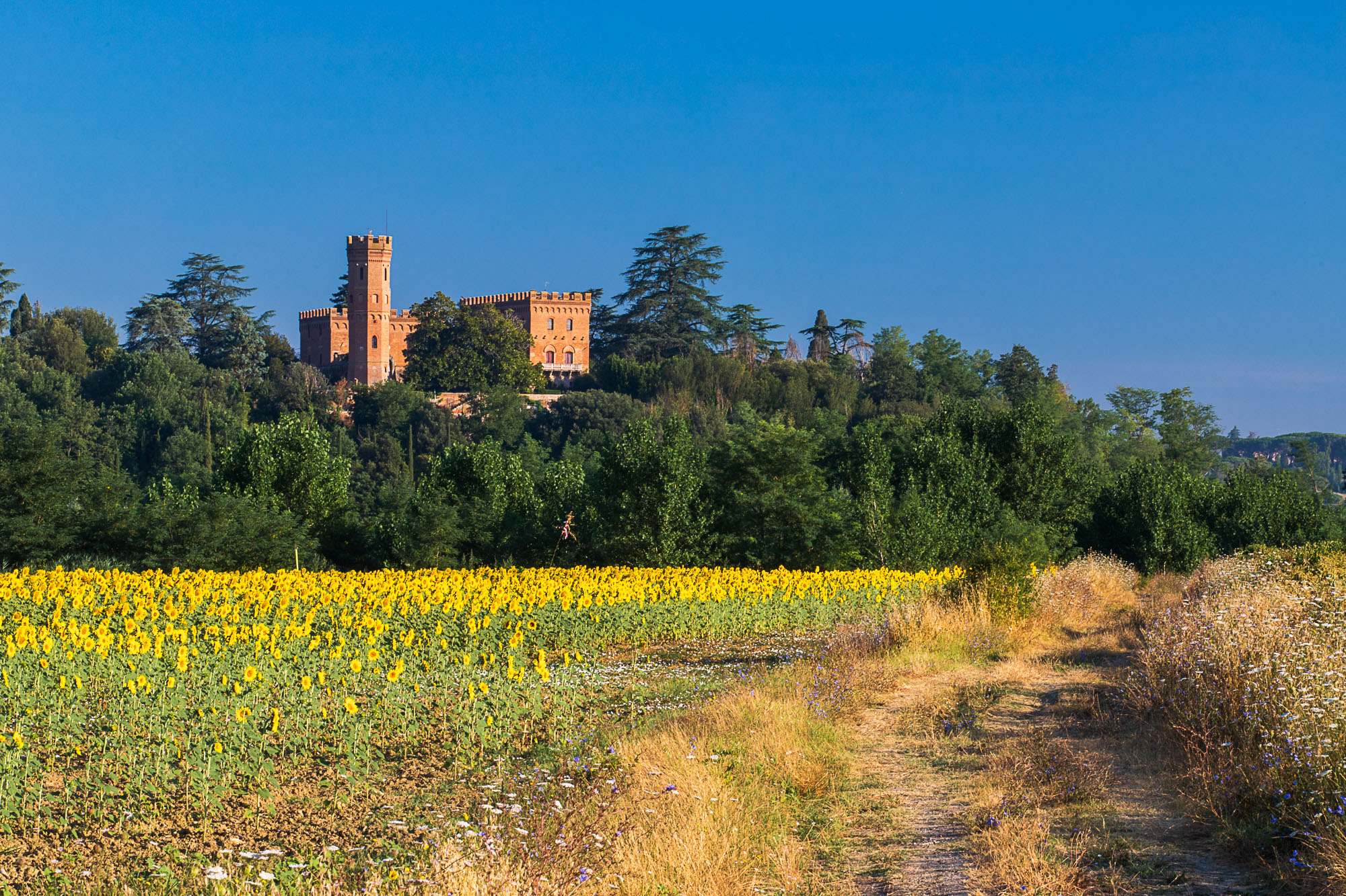 Tuscan Sunflowers, Italy