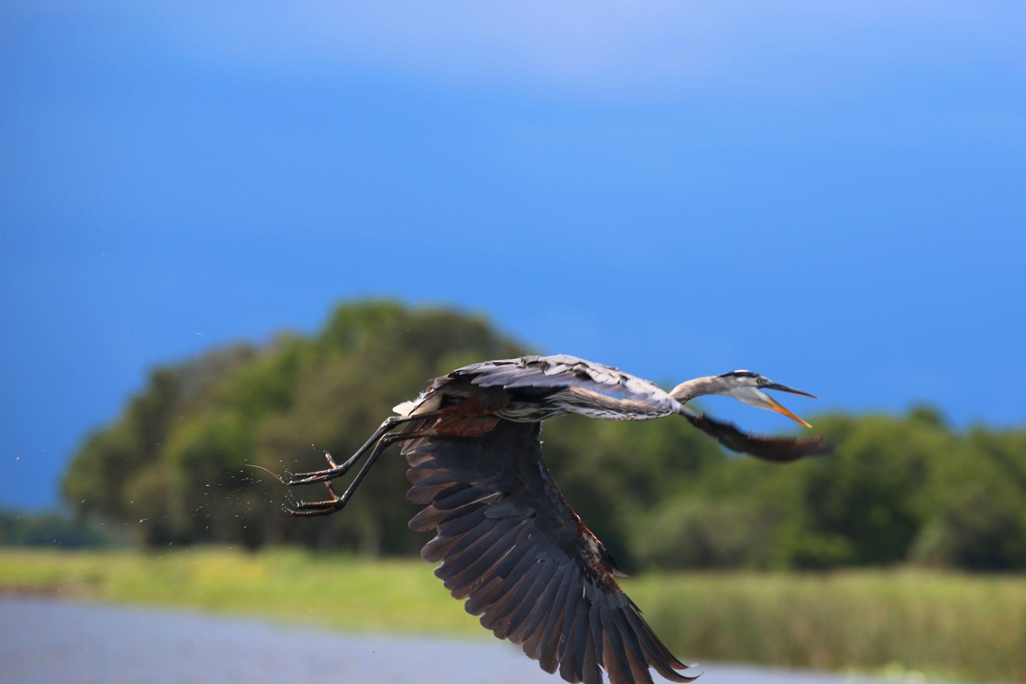 Wild Florida Gator park, USA
