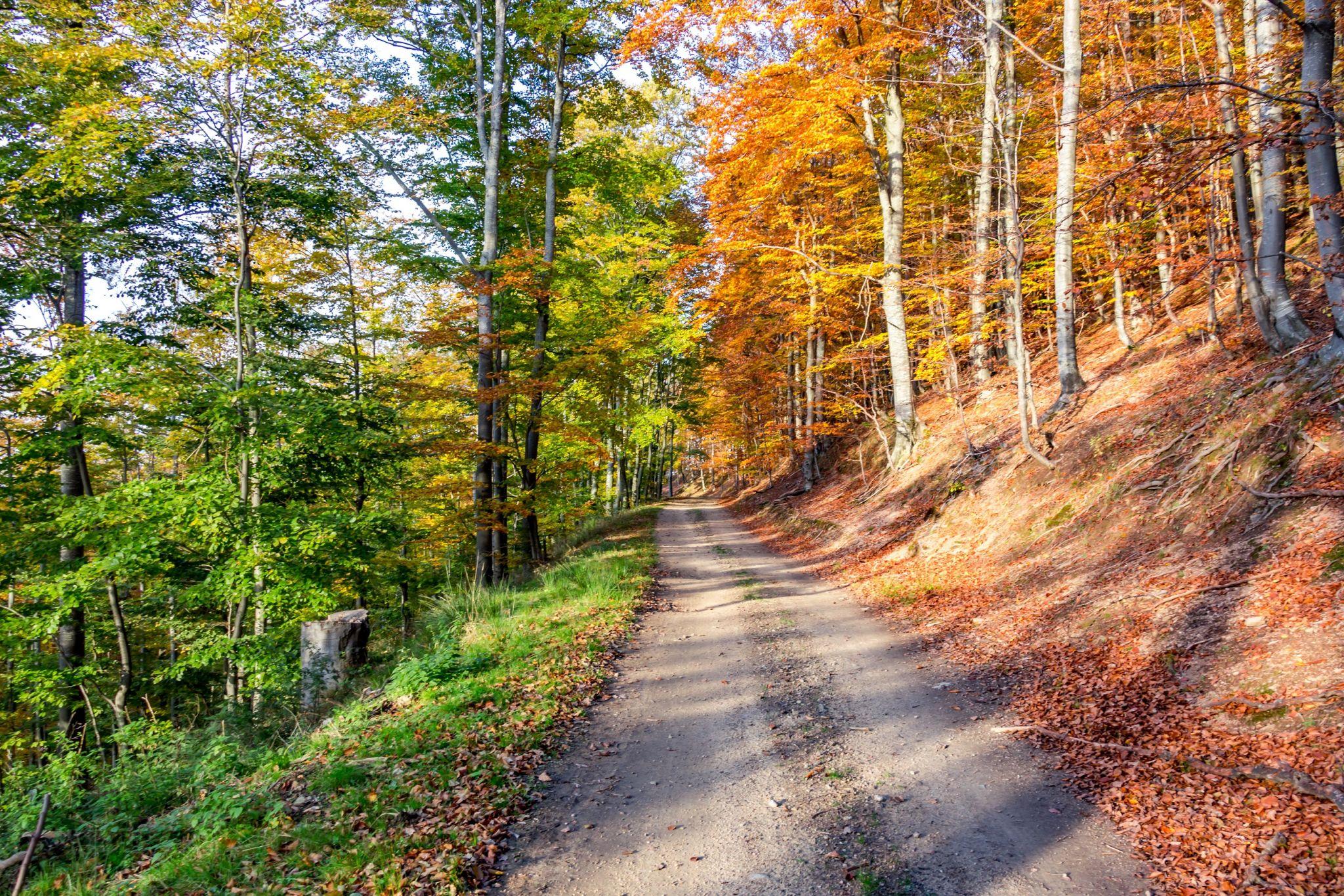 50 % Autumn, Romania