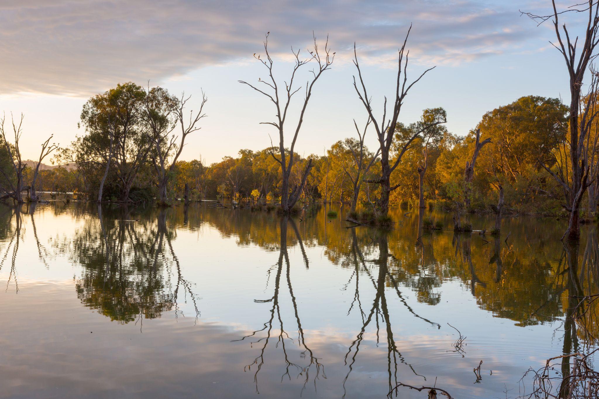 Albury Water Treatment Wetlands, Australia