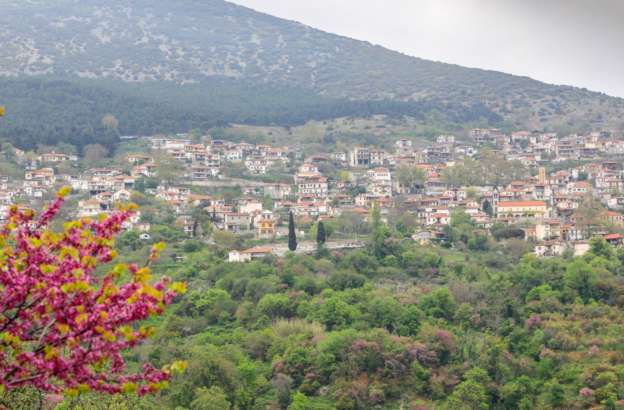 Blick auf Rapsani, Greece