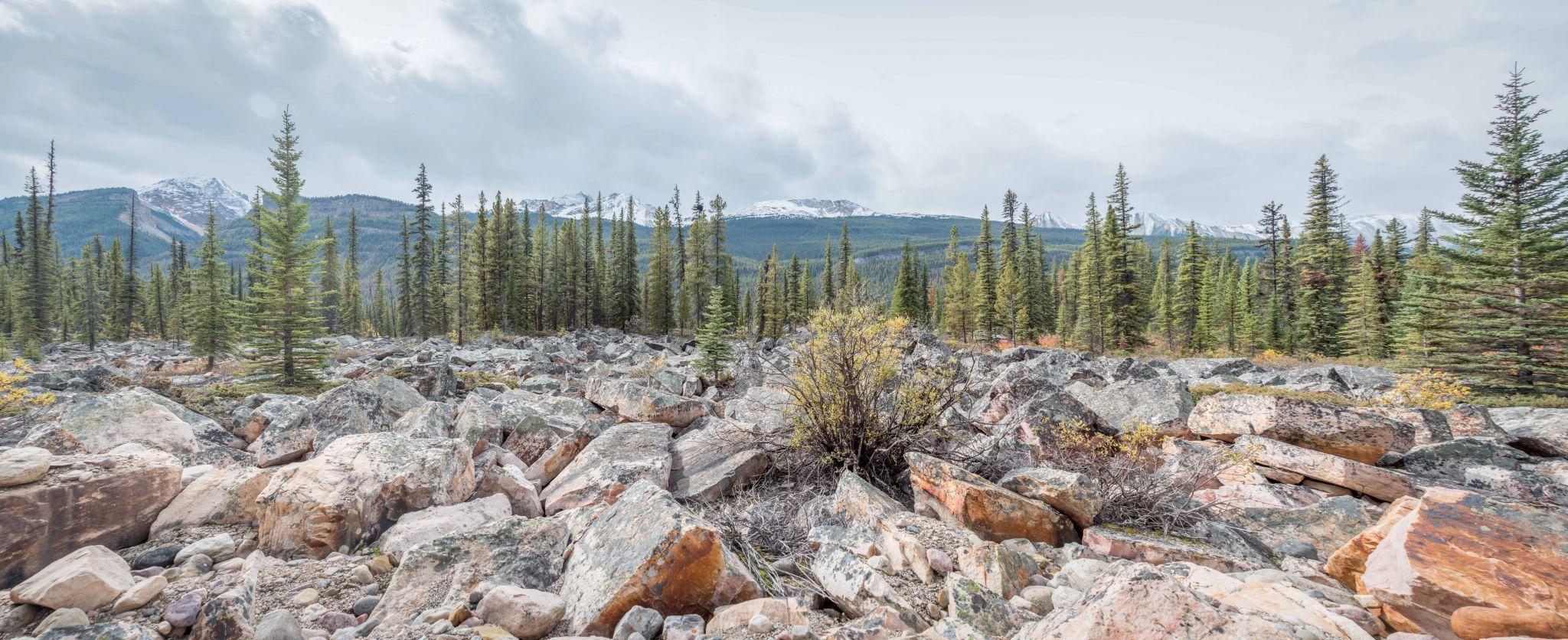 Quartzite Boulder Field - Icefields Parkway, Canada