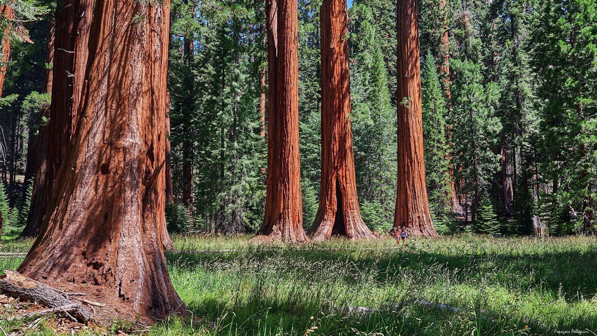 Big Trees Trail, USA