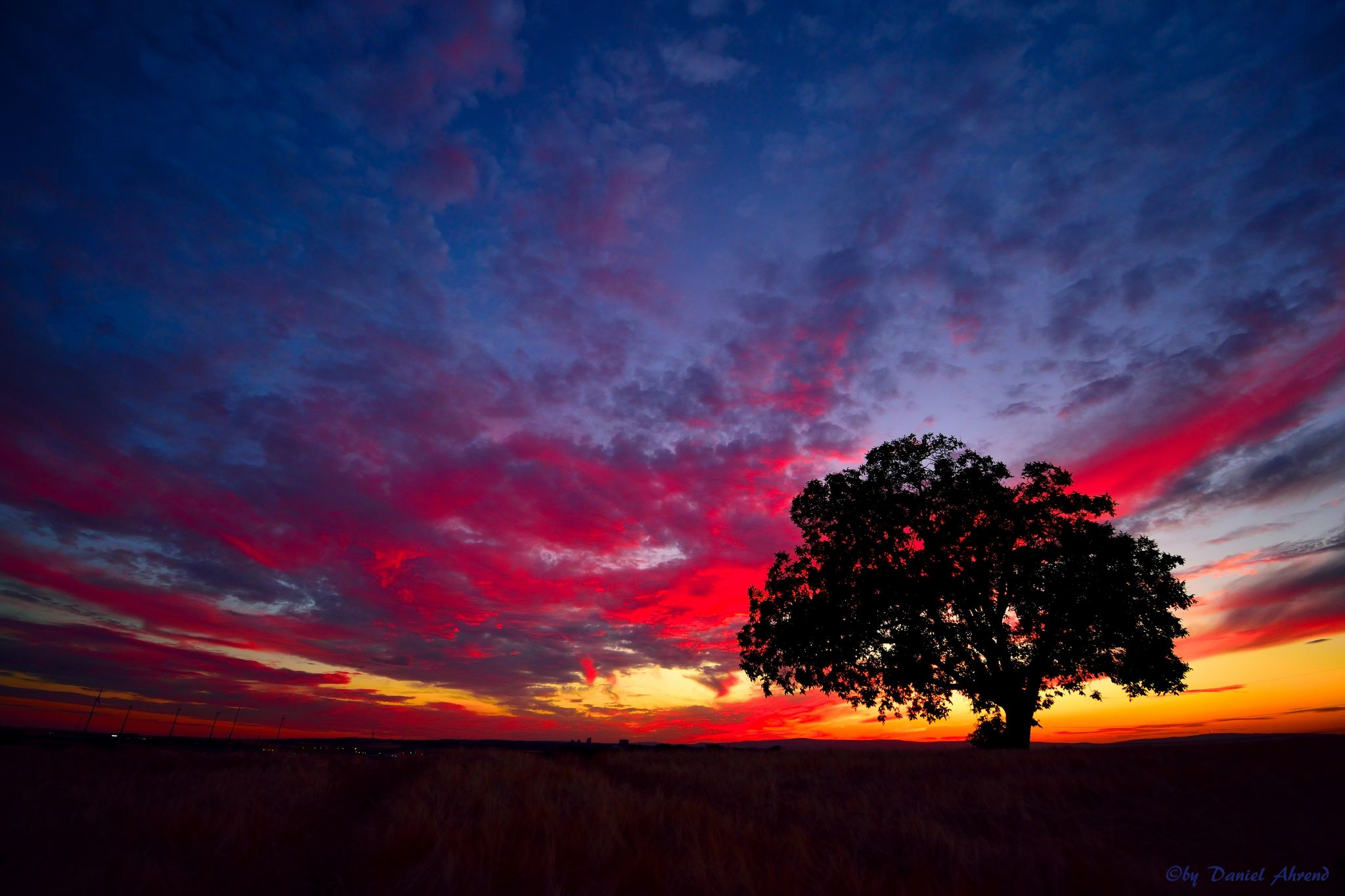 Tree in the sunset., Germany