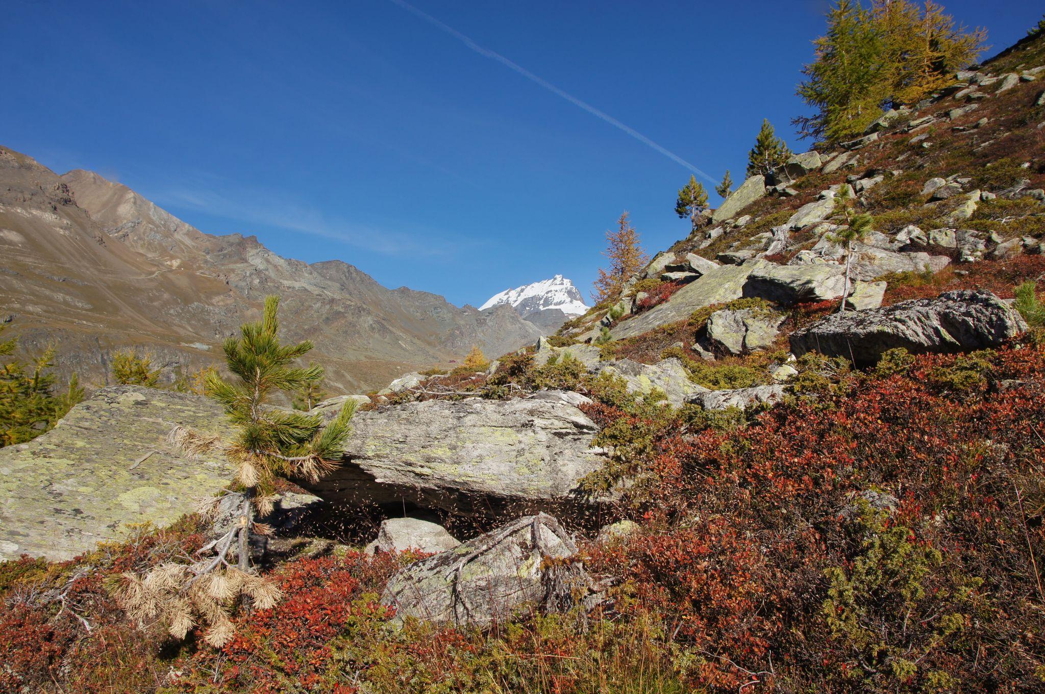 Autumn colours, Switzerland
