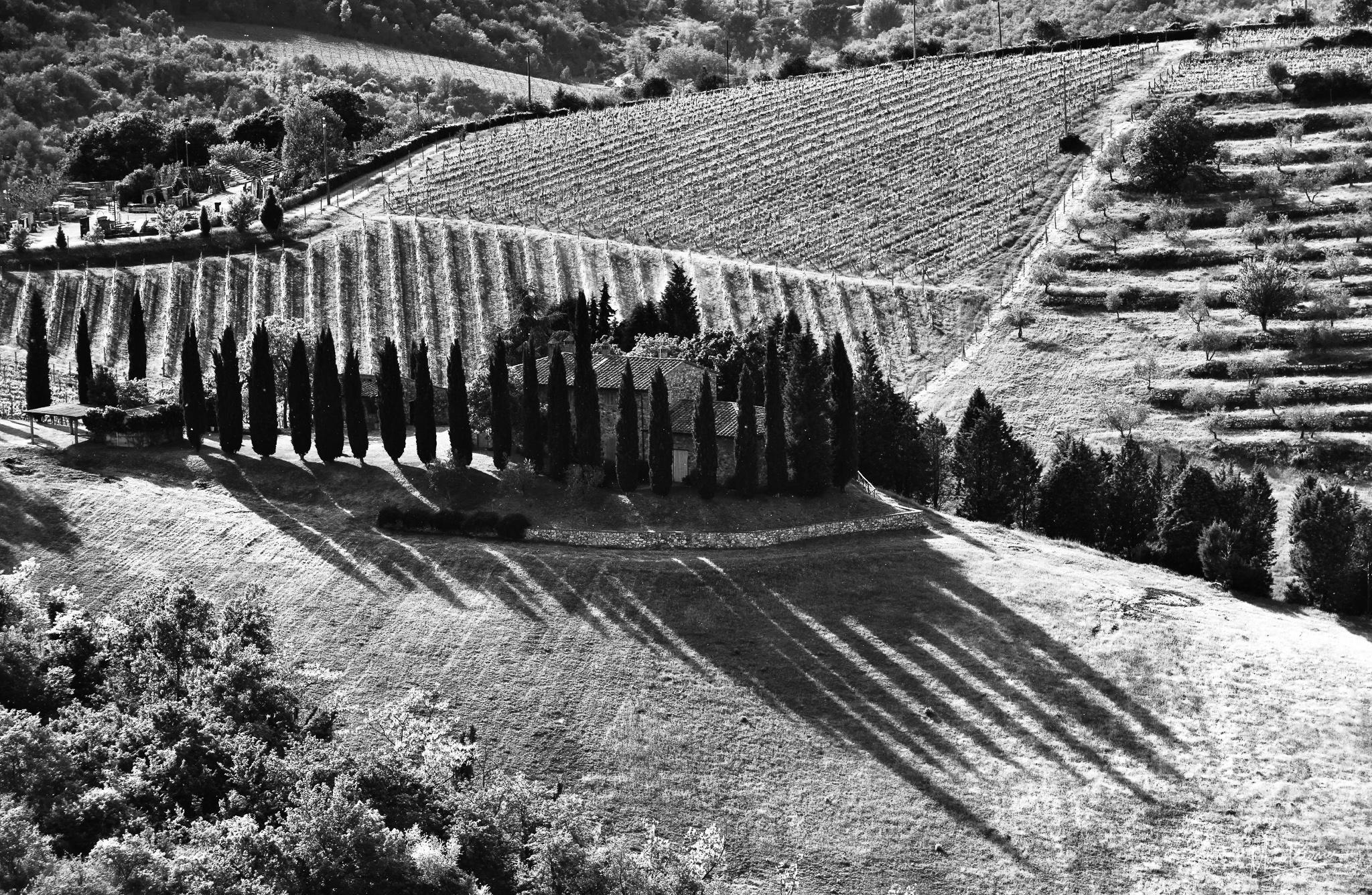 Chianti vineyard valley, Italy