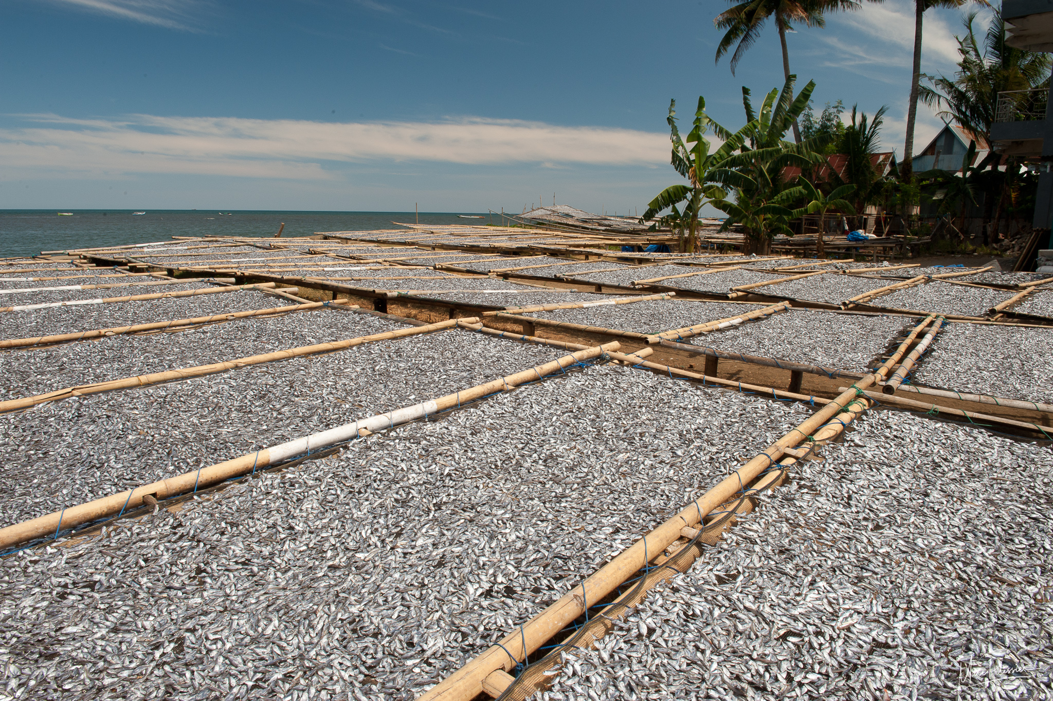 Drying fish area, Indonesia