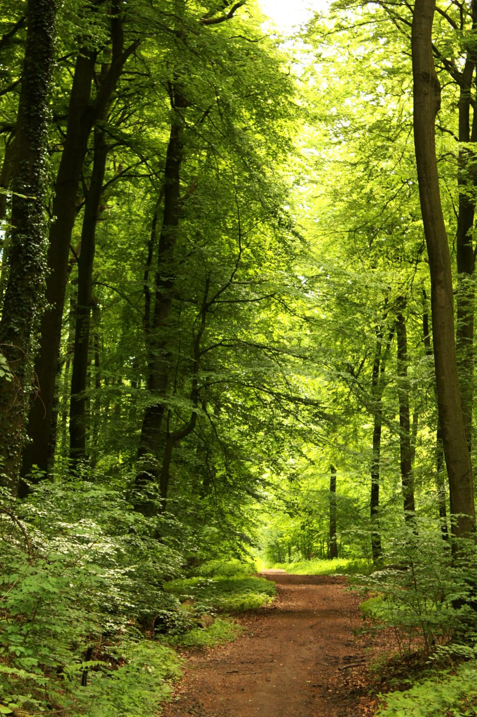 in den Baumbergen, Germany