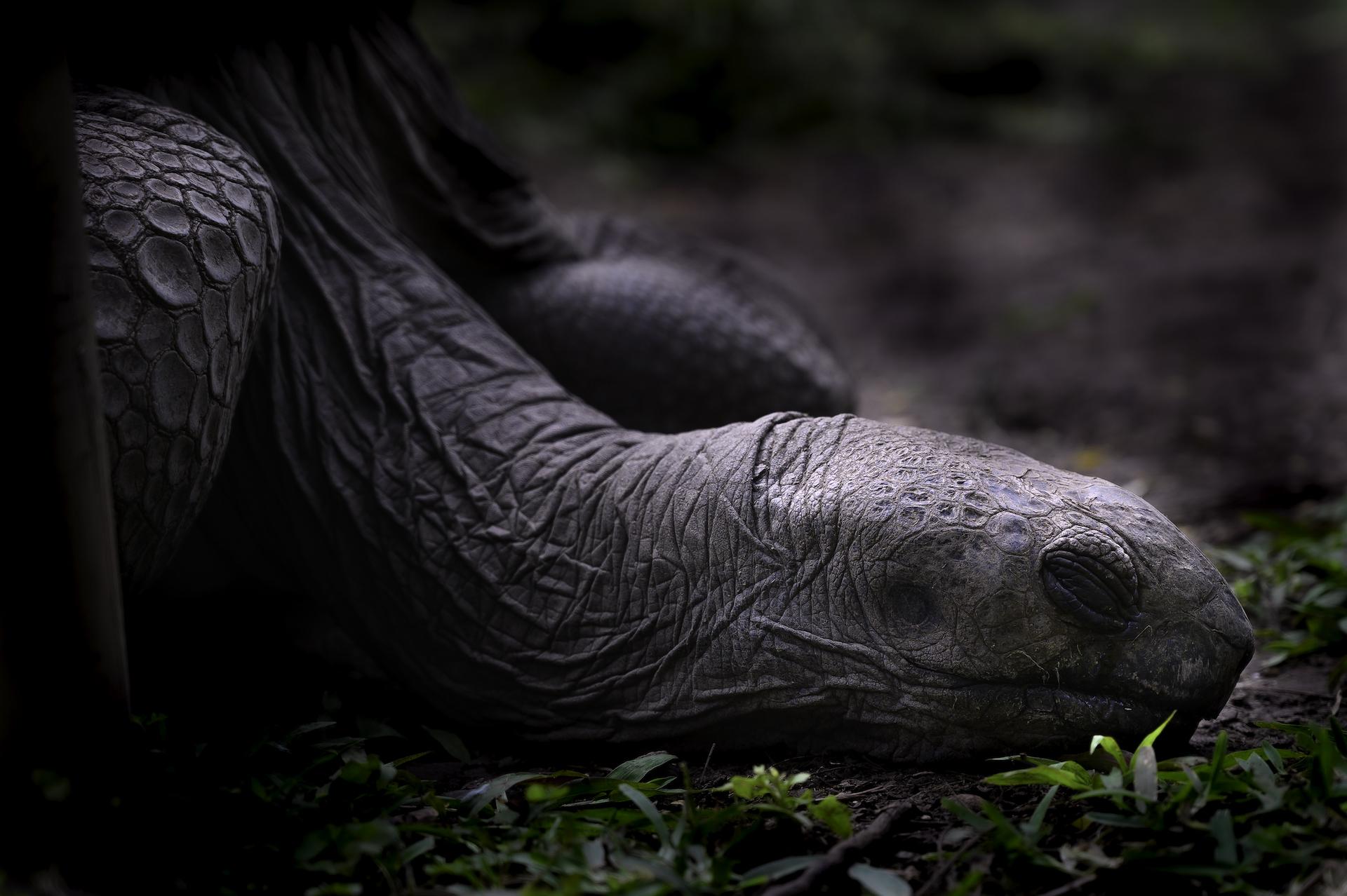 Schildkröten, Mauritius