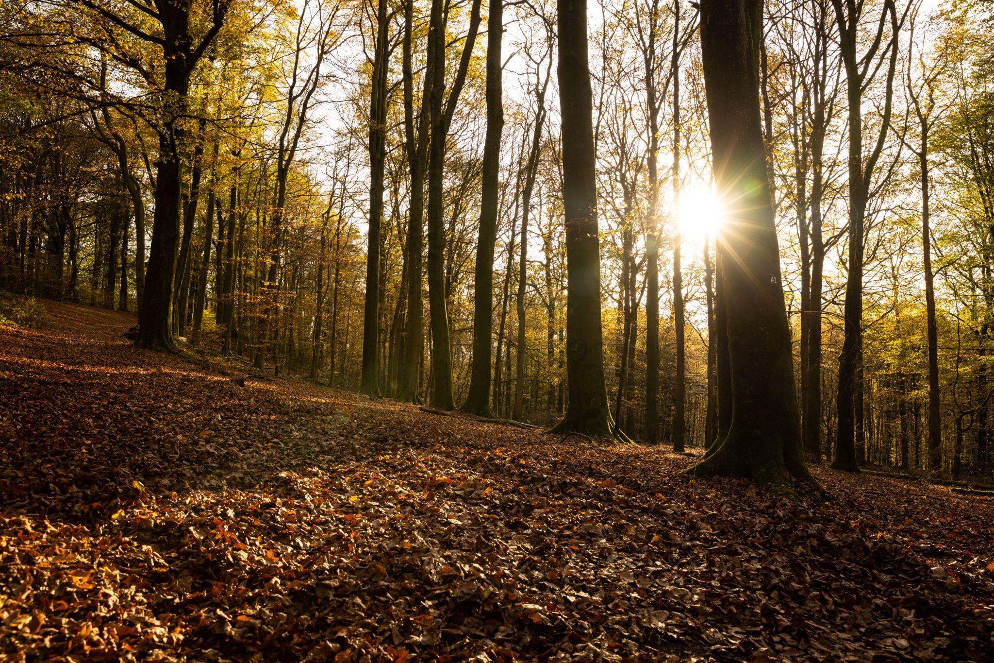Tiergarten, Germany