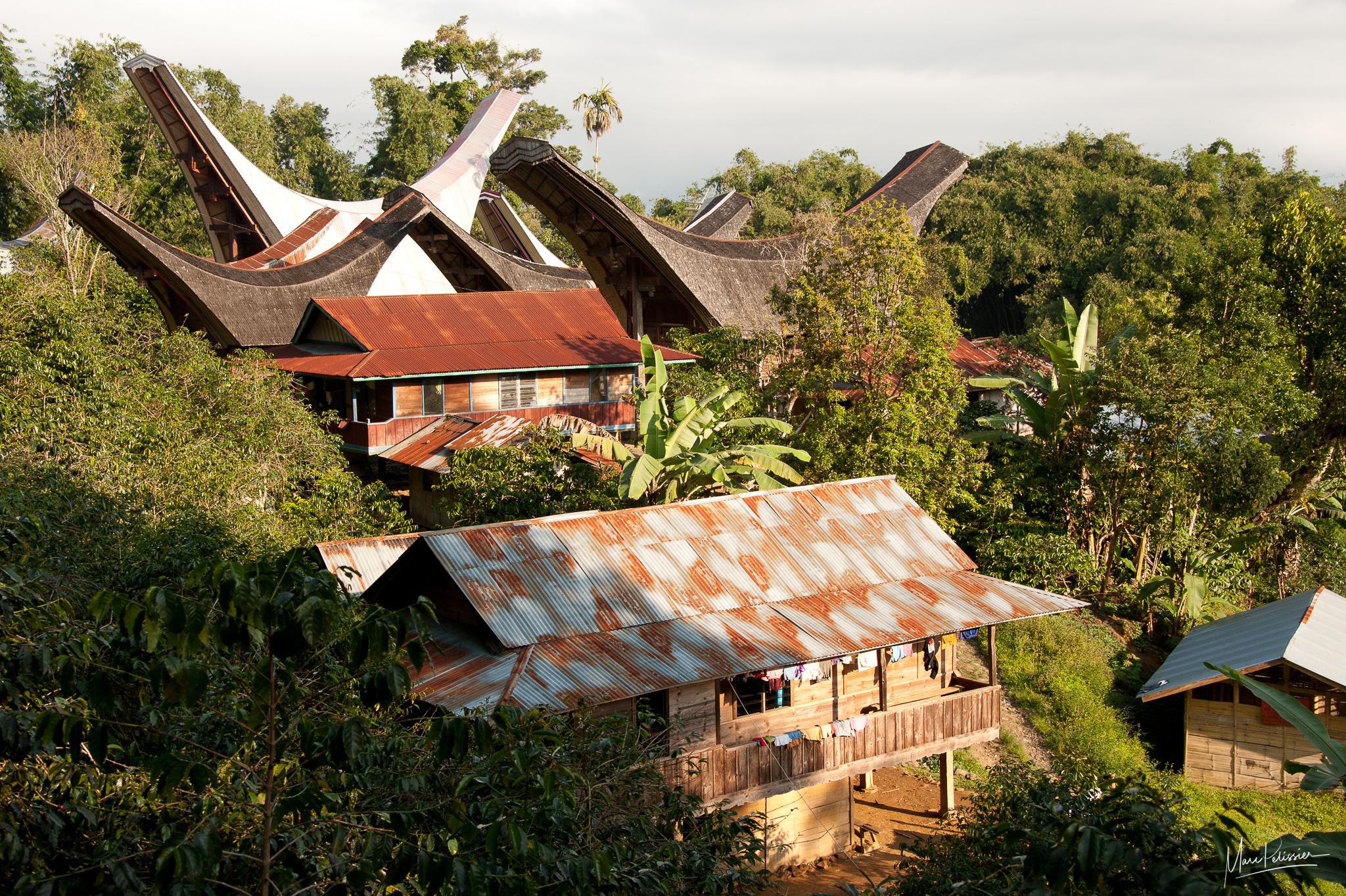 Toraja houses in jungle, Indonesia