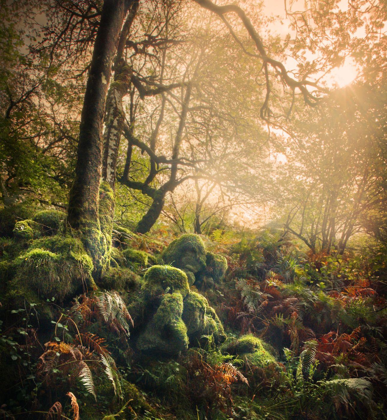 Venford woods, United Kingdom