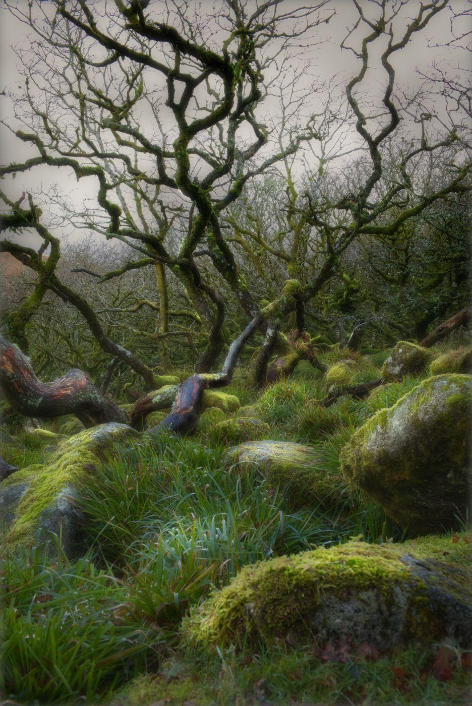 Wistman Woods, United Kingdom