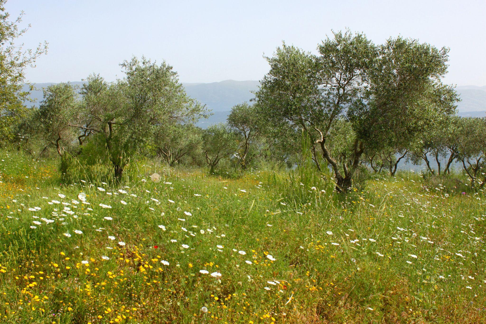 Klostergarten auf dem Berg Netofa, Israel