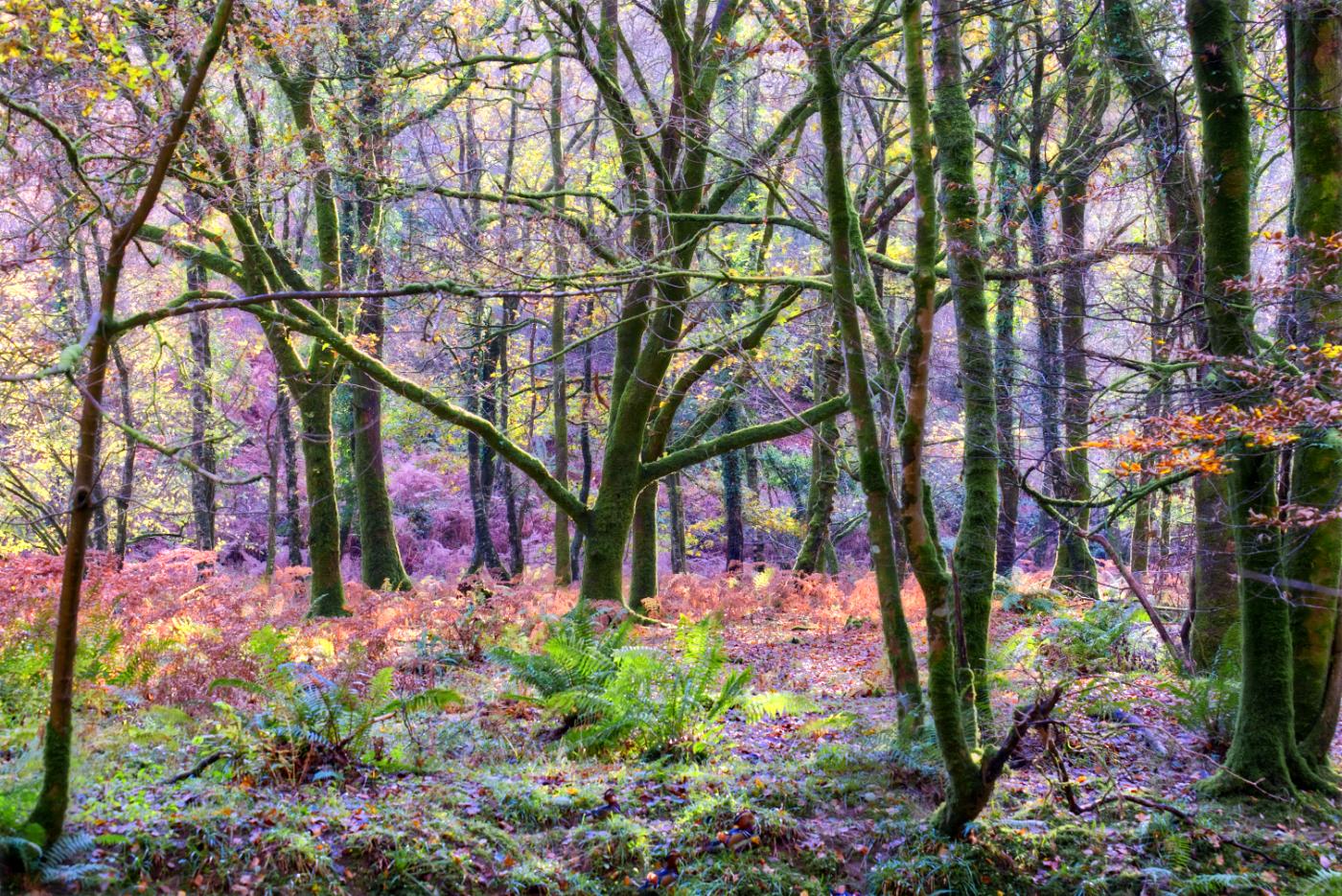 Plymbridge woods, United Kingdom