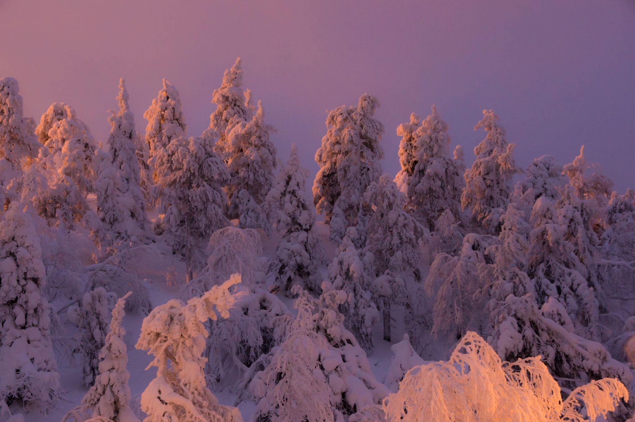 Winter wonderland, Kuusamo, Finland