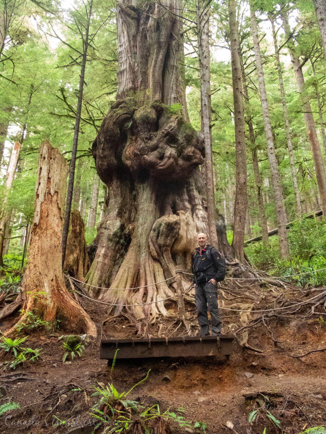 Canada's Gnarliest Tree, Canada