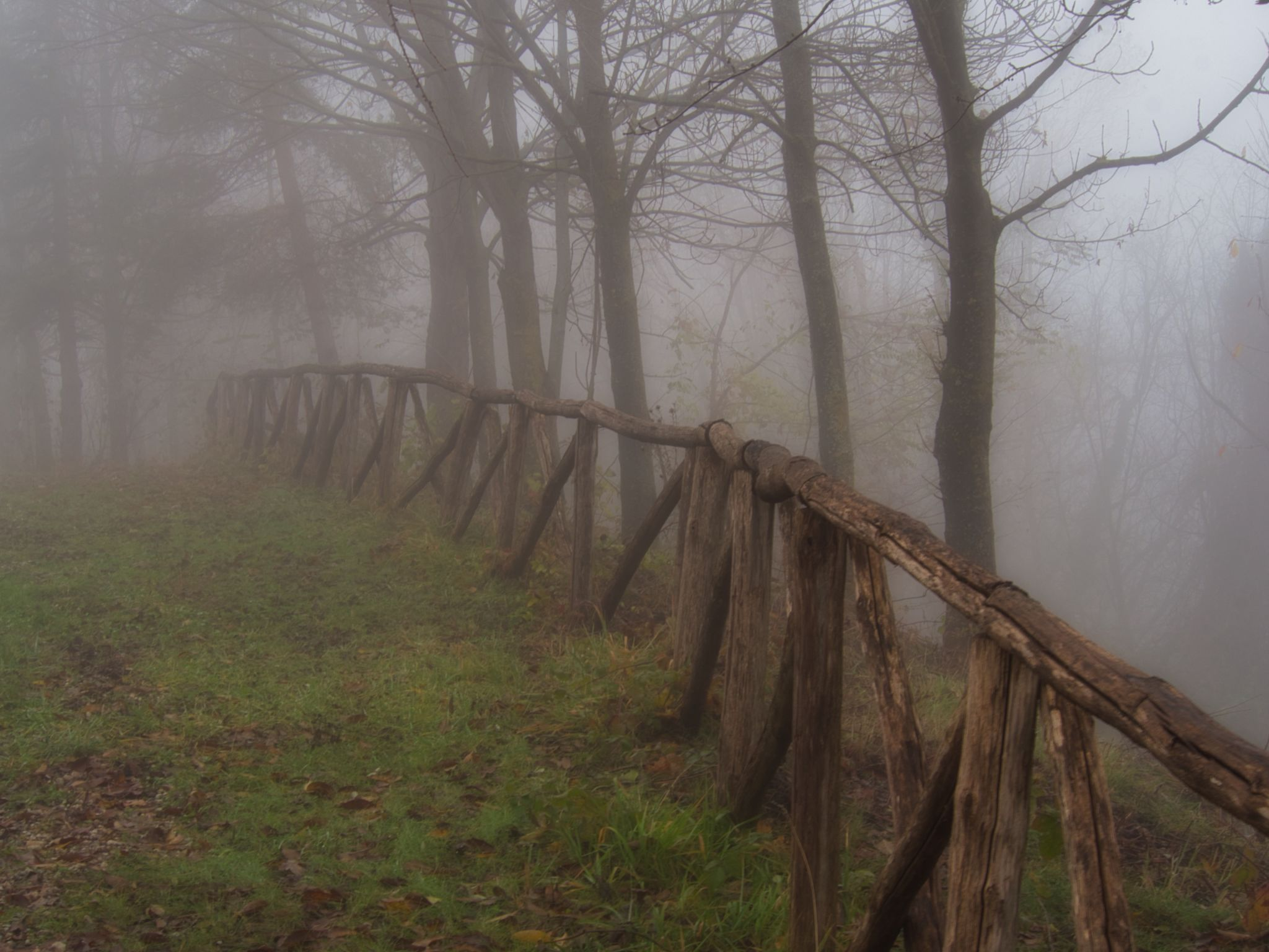Foggy Morning in Piemonte, Italy