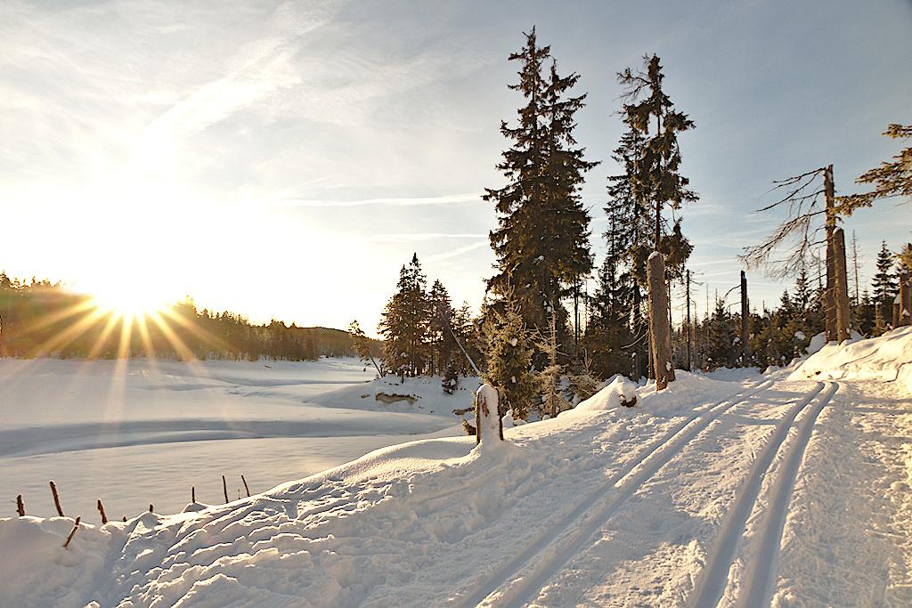 Oderteich winter morning, Germany