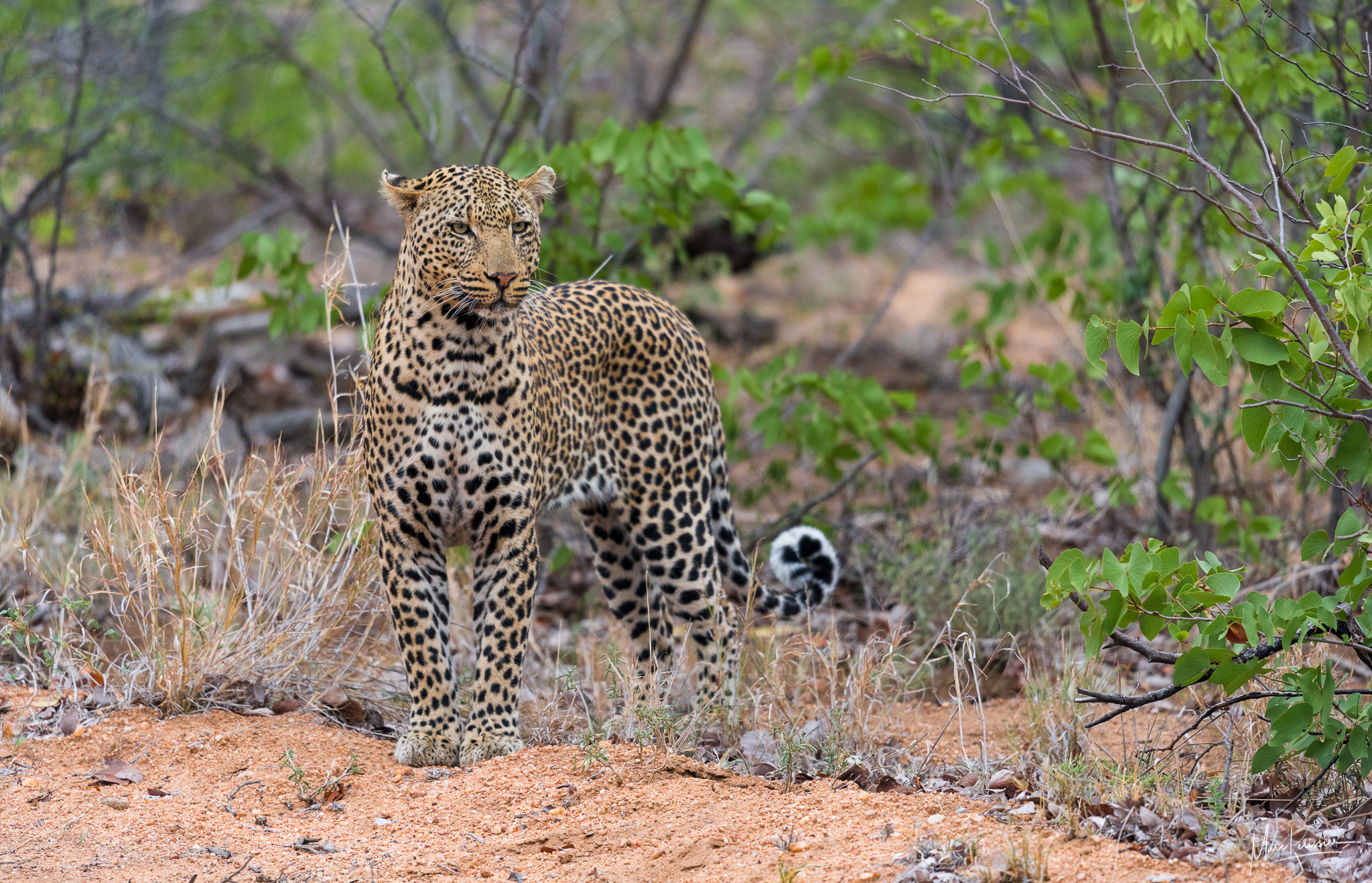 Umbabat Nature reserve, South Africa