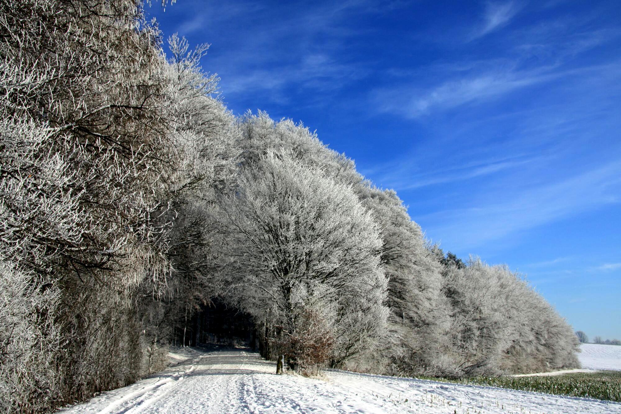Winter in den Baumbergen, Germany