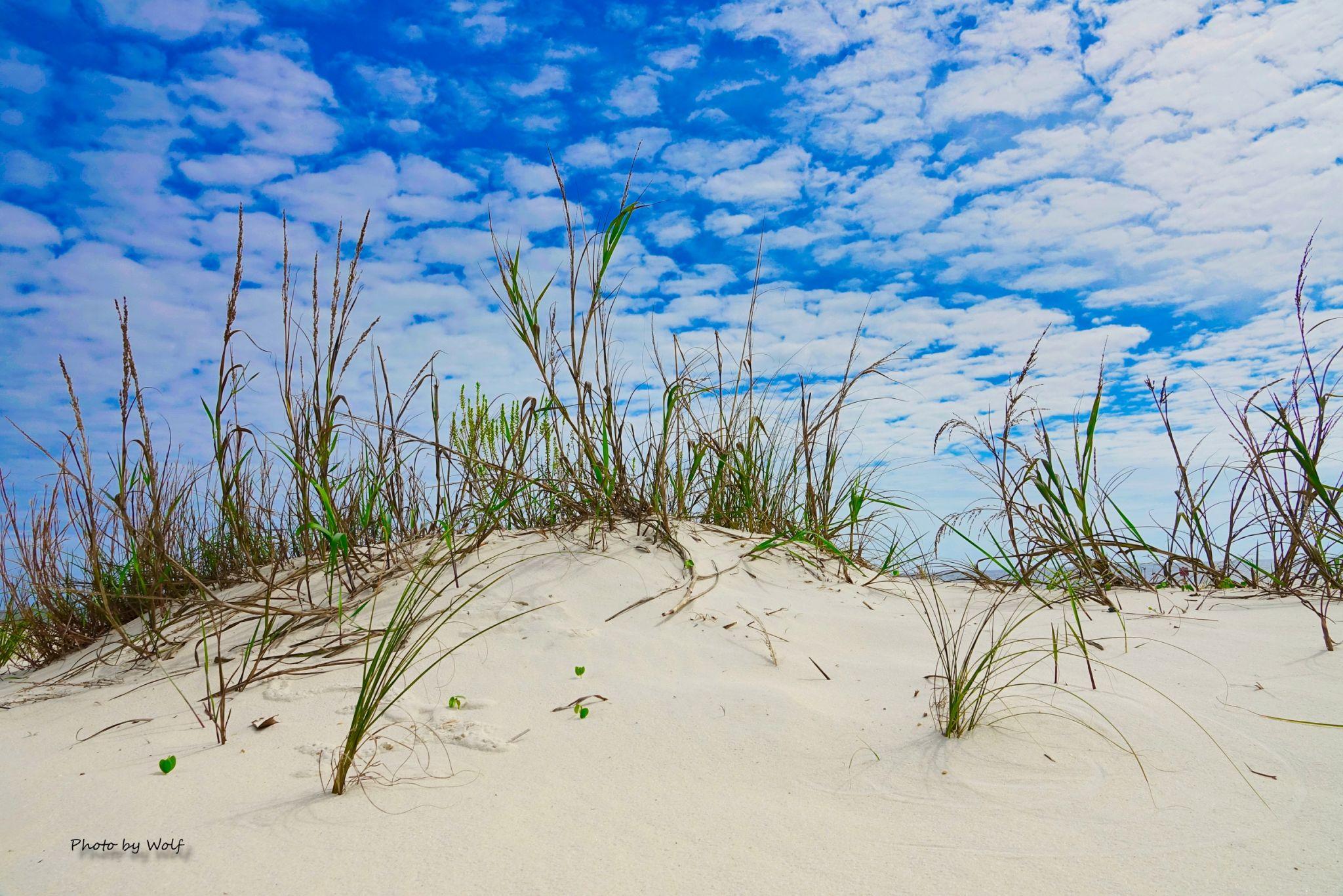 Beach Grass, USA