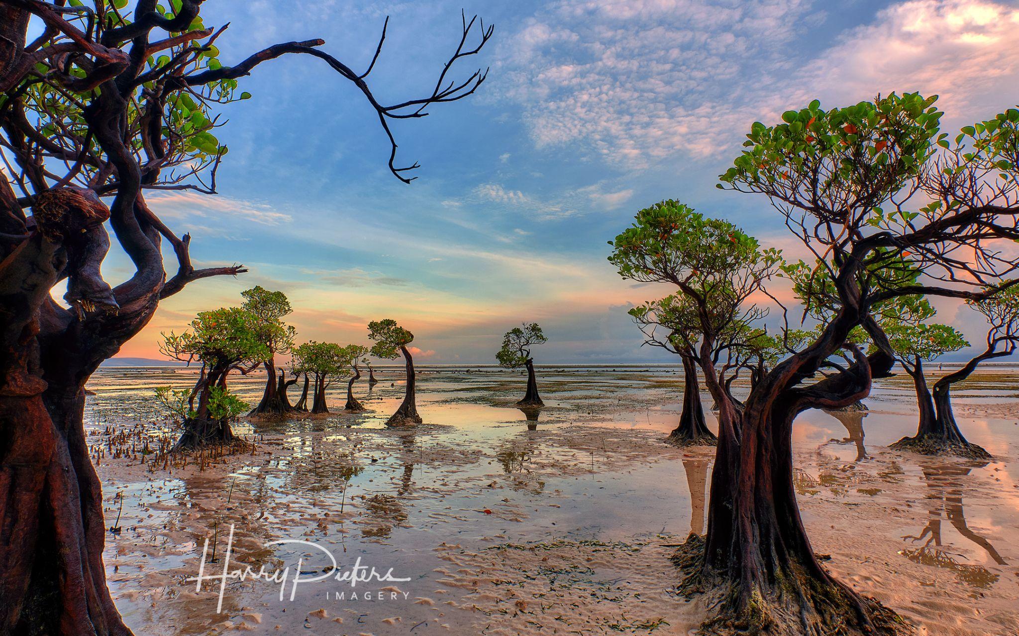 Dancing mangroves at Walakiri Beach, Indonesia