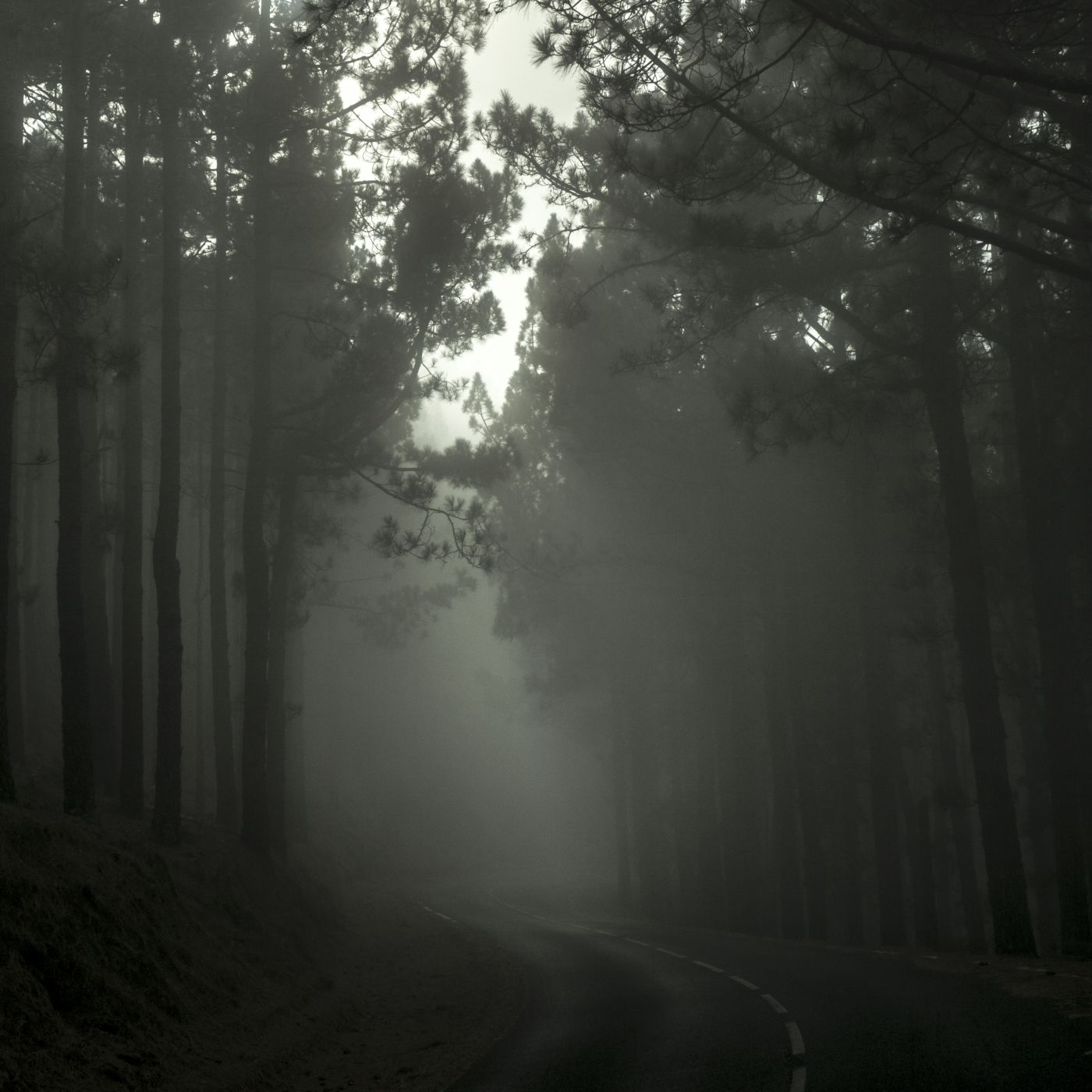 Fog in the Forest, Spain