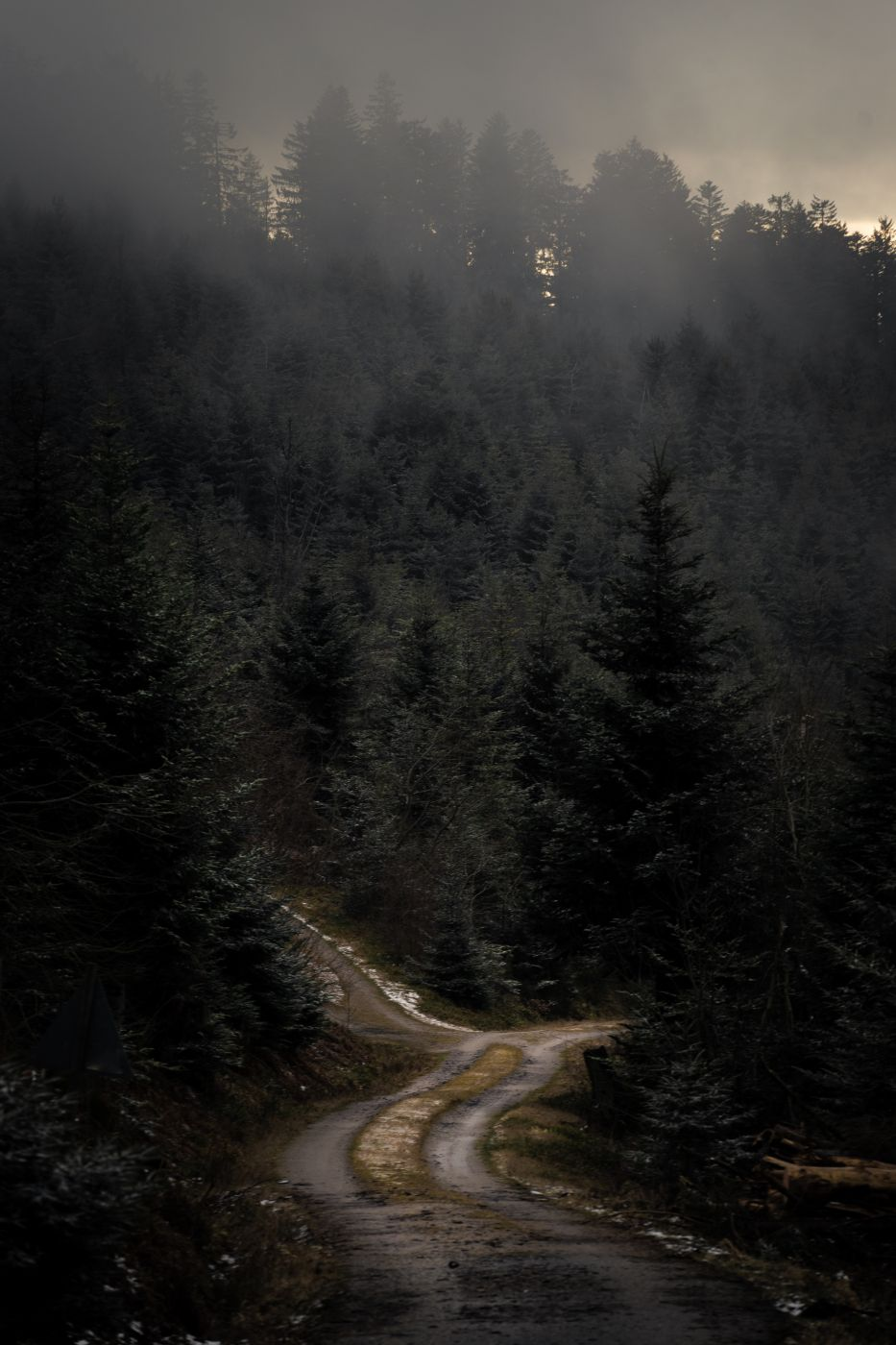 Forest Track, Germany