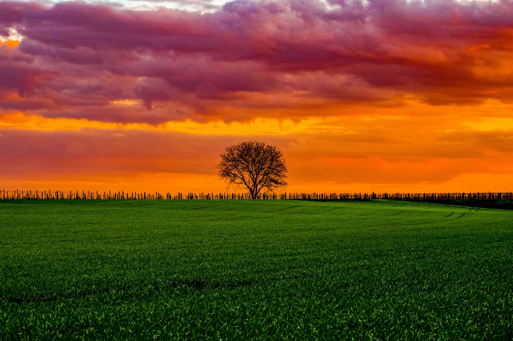 Lonely tree, Germany