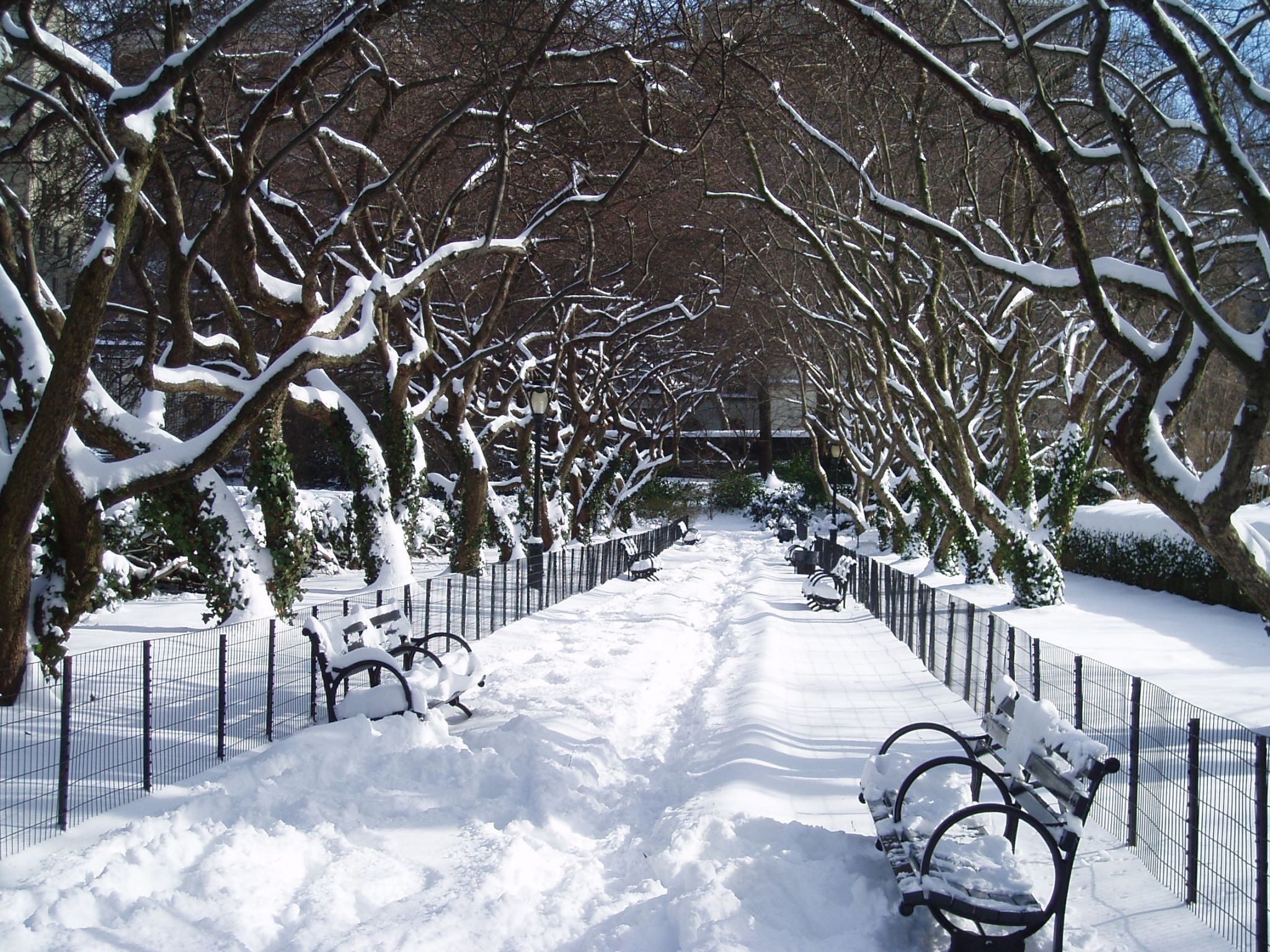 Central Park in Snow New York, USA