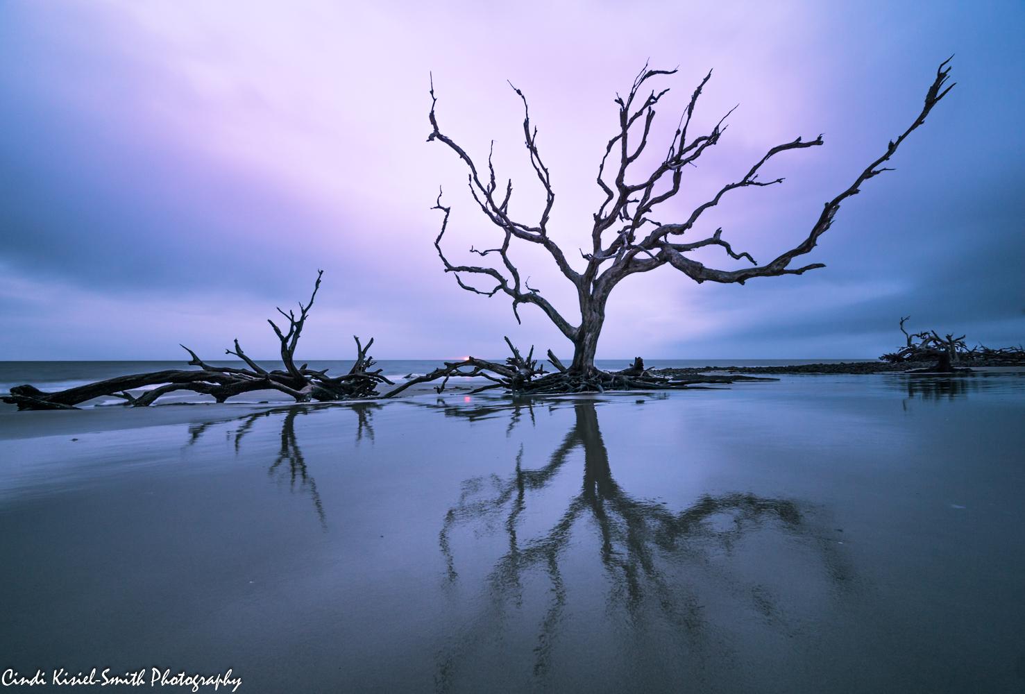 Driftwood Beach Jekyll Island, USA