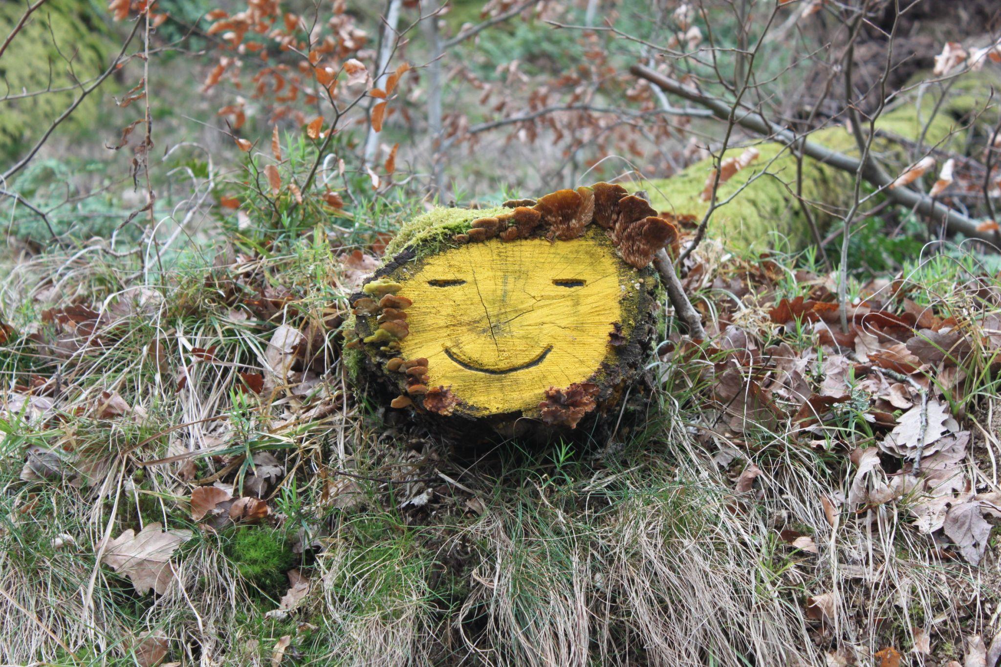 freundliches Gesicht im Wald, Germany