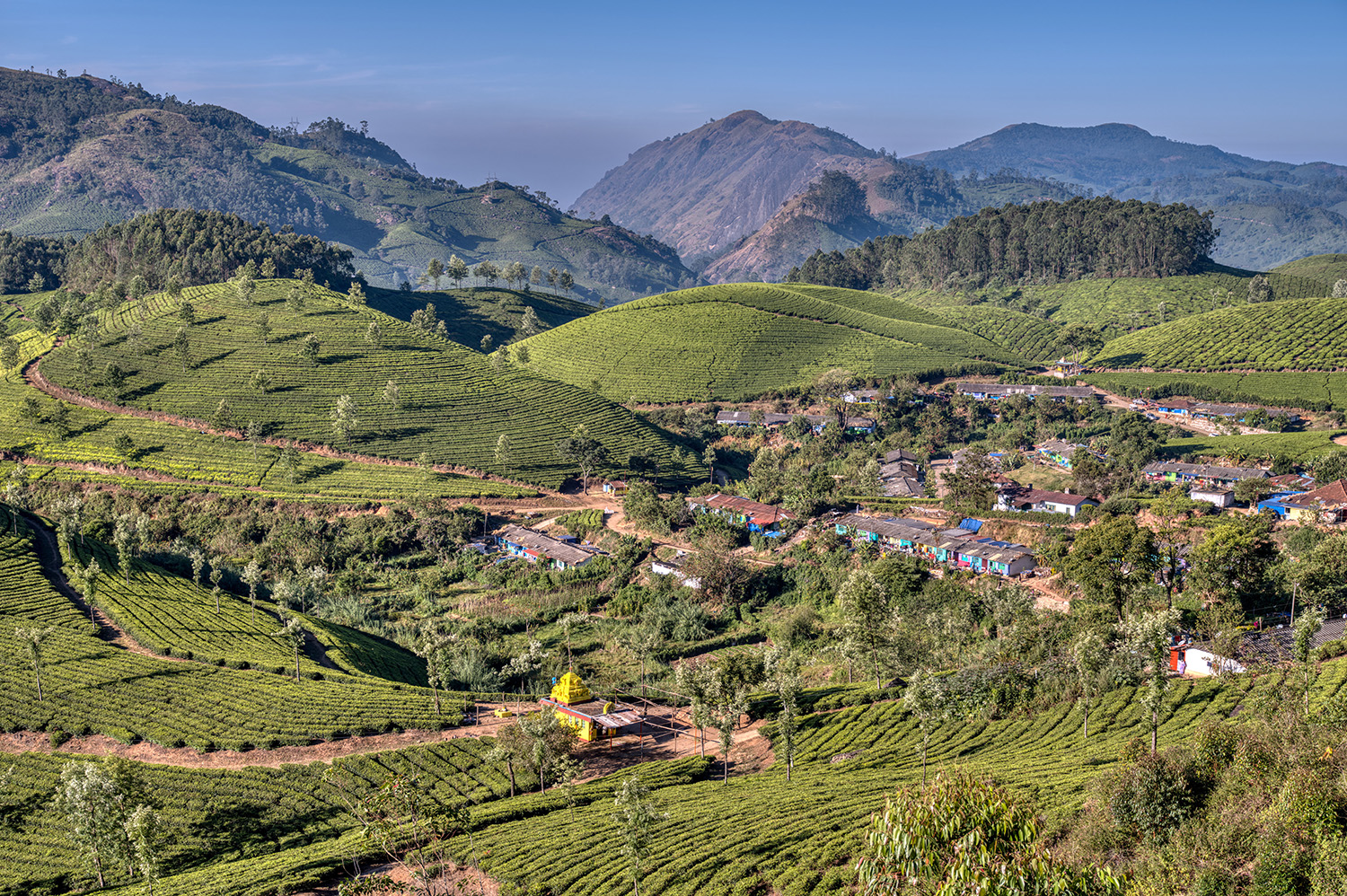 Tea plantation with worker's village and hindu temple, India